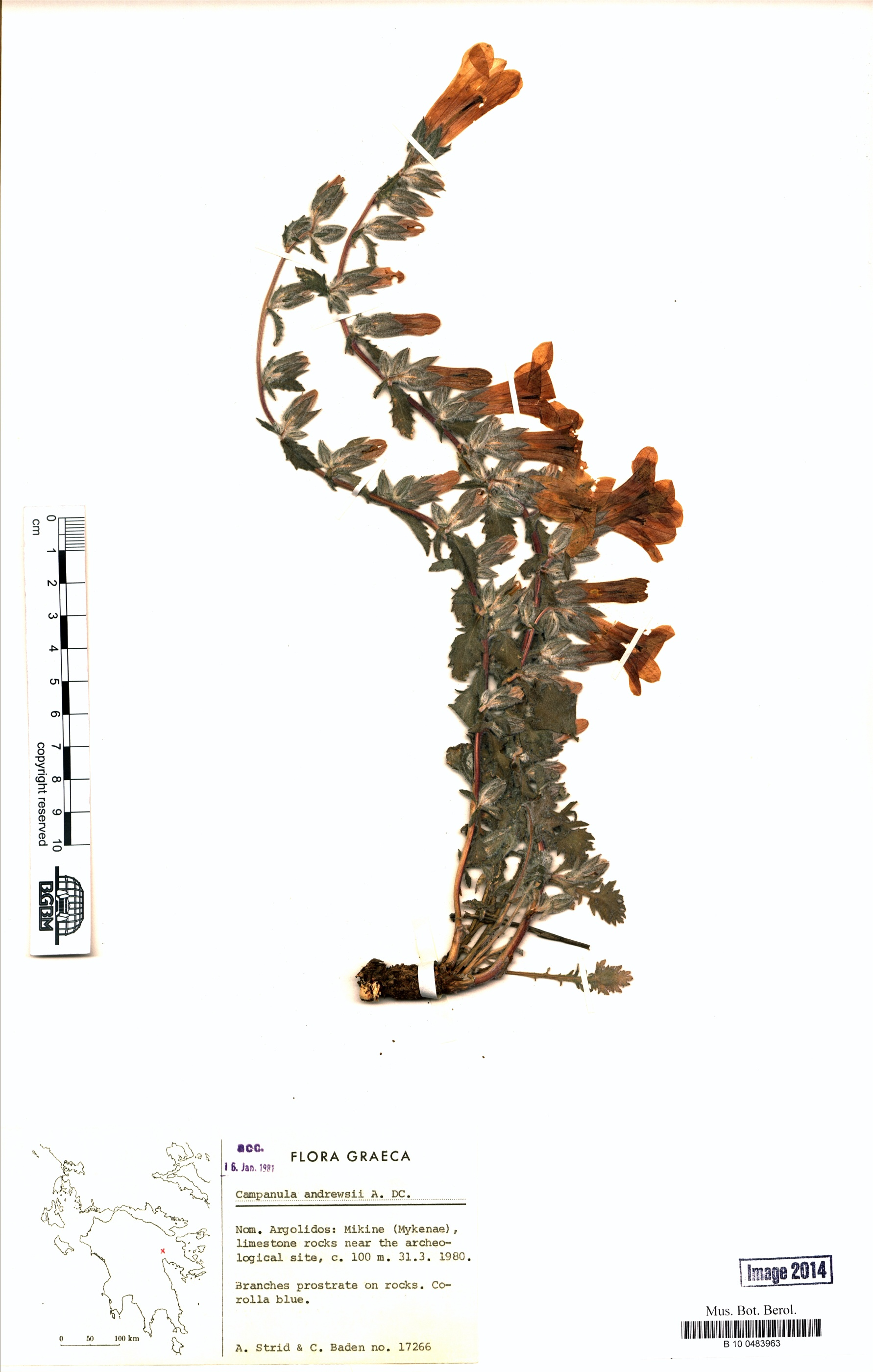 http://ww2.bgbm.org/herbarium/images/B/10/04/83/96/B_10_0483963.jpg