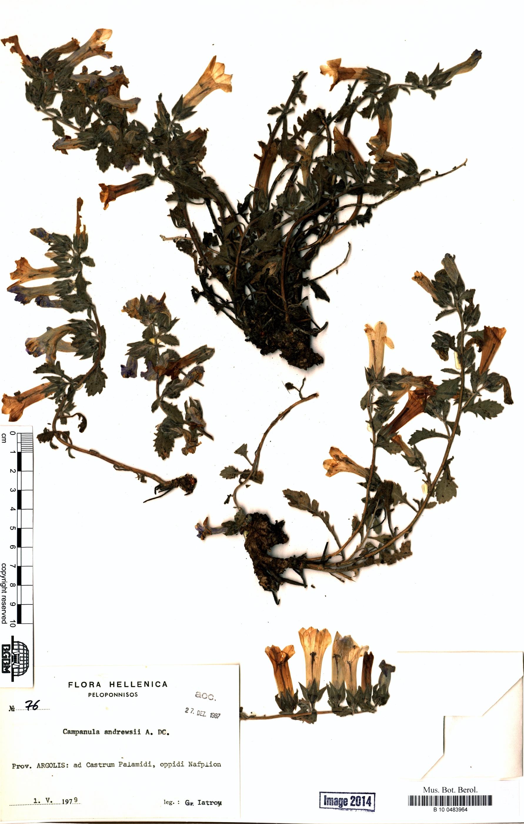 http://ww2.bgbm.org/herbarium/images/B/10/04/83/96/B_10_0483964.jpg
