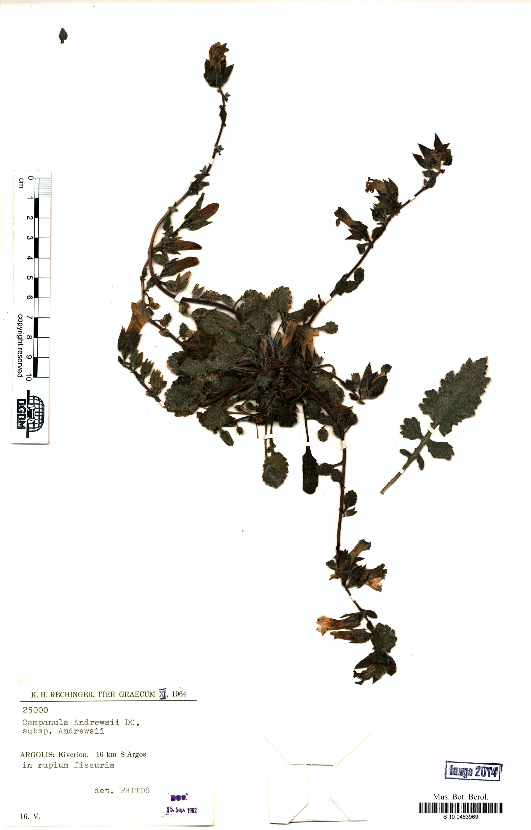 http://ww2.bgbm.org/herbarium/images/B/10/04/83/96/B_10_0483969.jpg