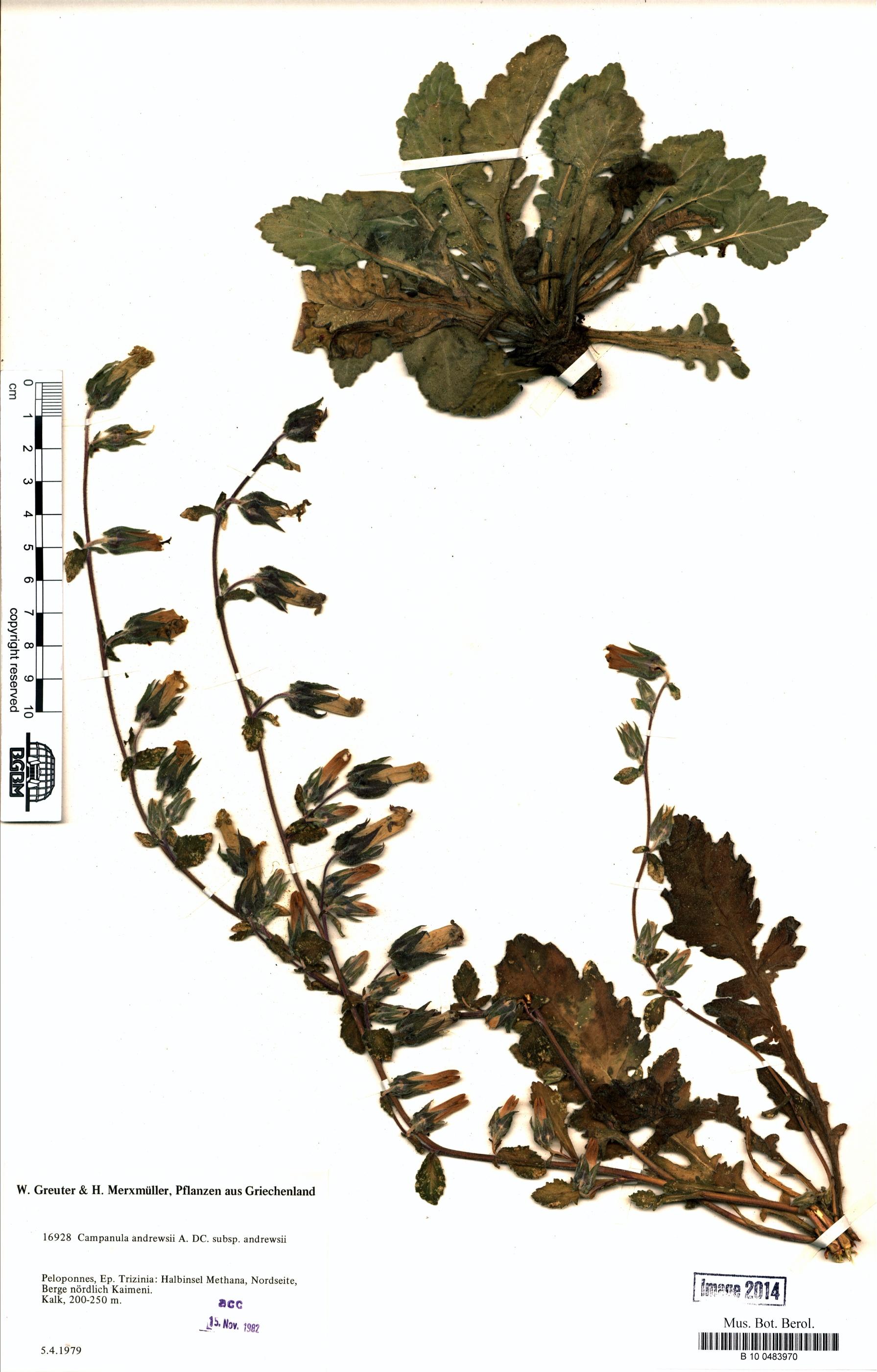 http://ww2.bgbm.org/herbarium/images/B/10/04/83/97/B_10_0483970.jpg