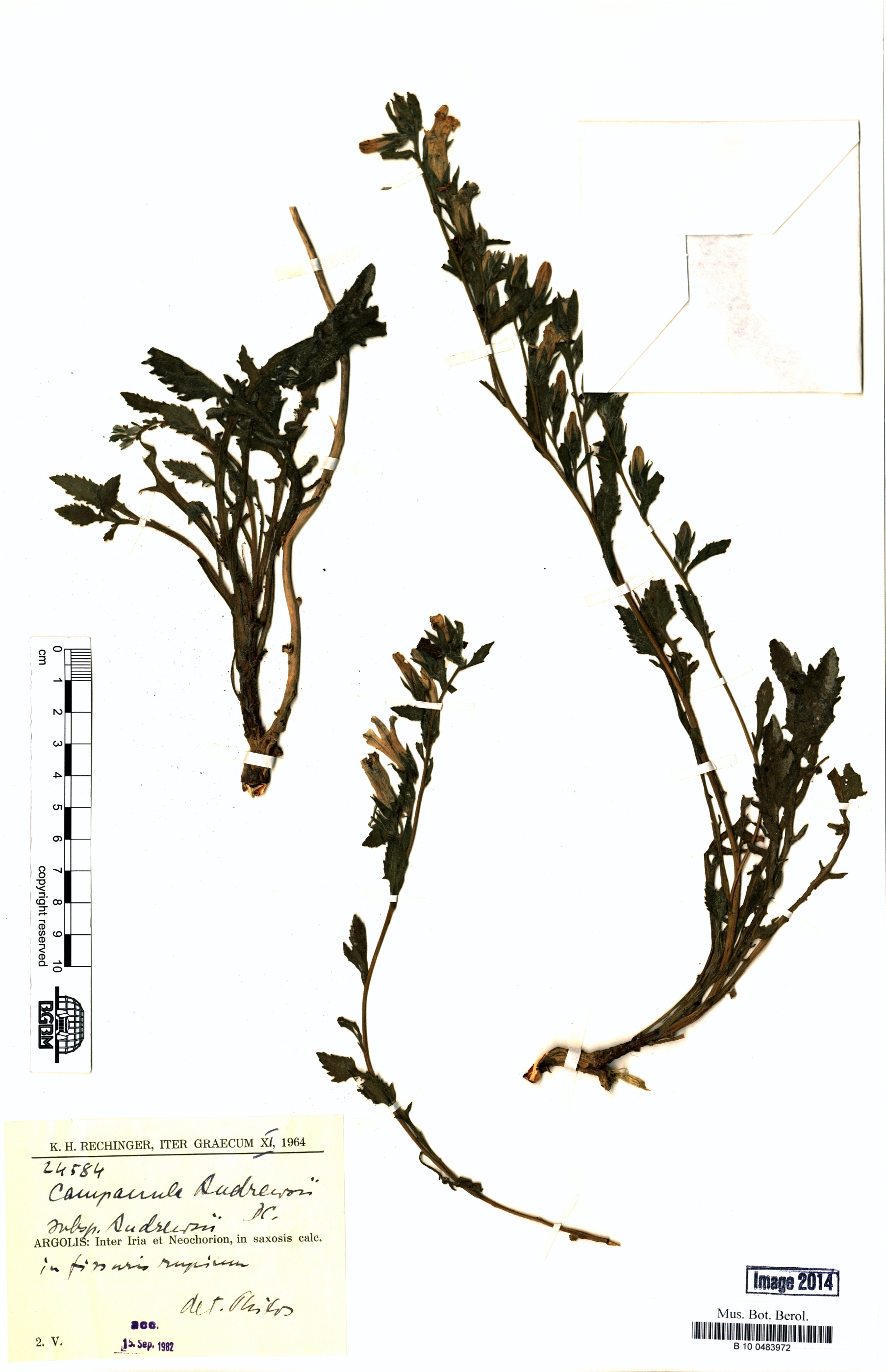 http://ww2.bgbm.org/herbarium/images/B/10/04/83/97/B_10_0483972.jpg