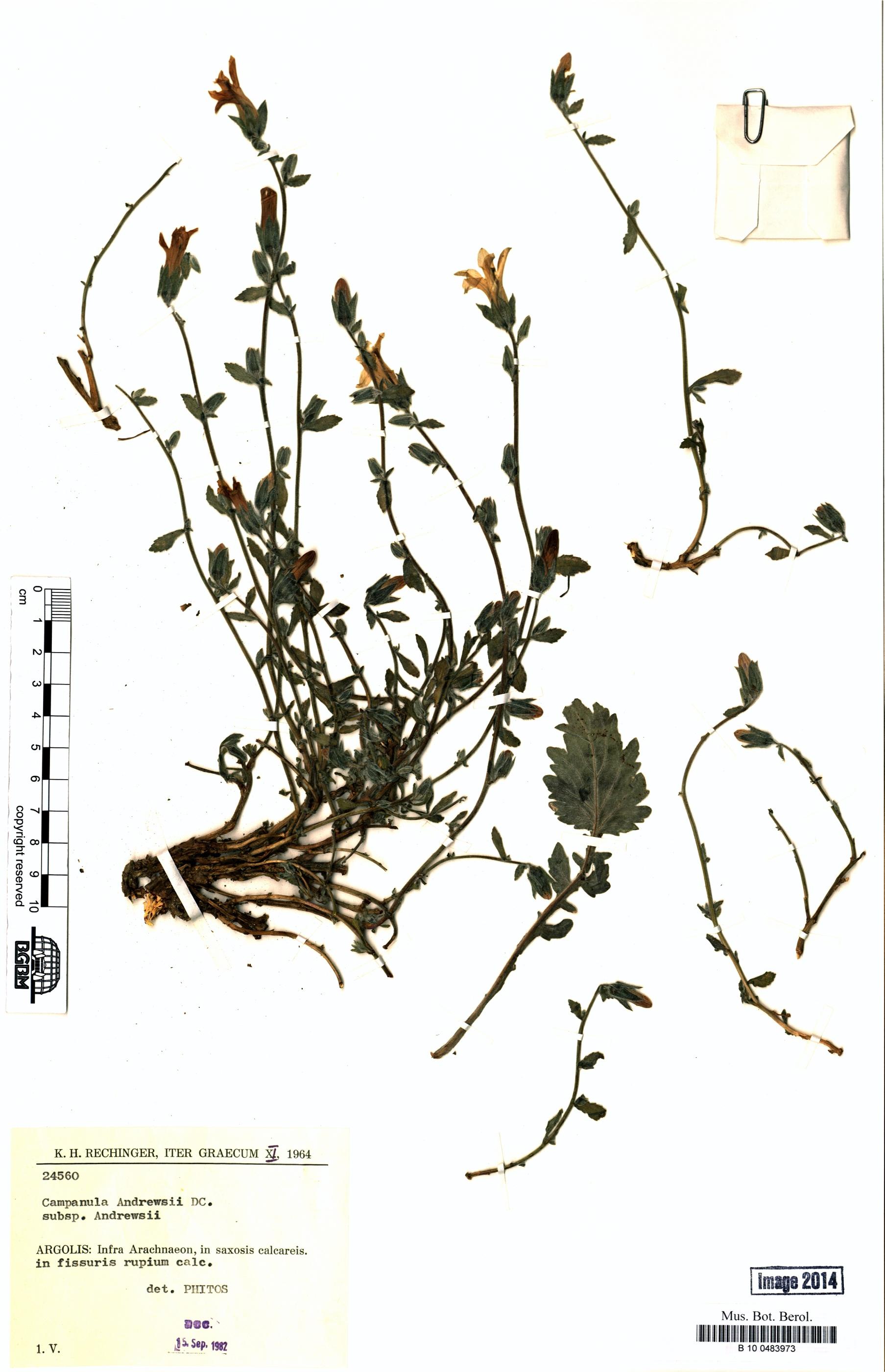 http://ww2.bgbm.org/herbarium/images/B/10/04/83/97/B_10_0483973.jpg