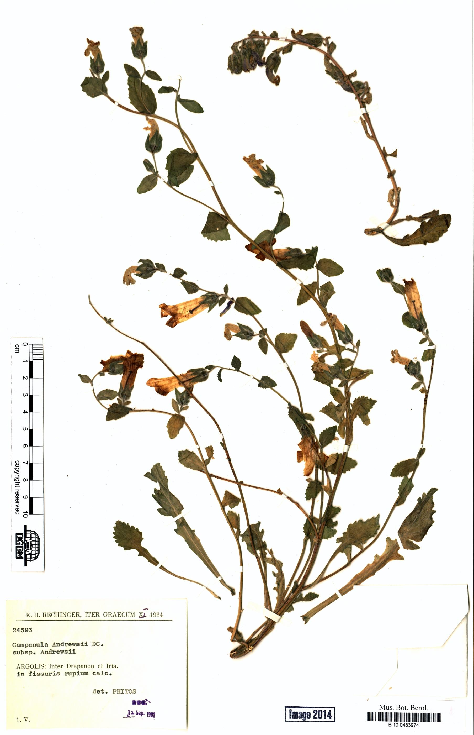 http://ww2.bgbm.org/herbarium/images/B/10/04/83/97/B_10_0483974.jpg