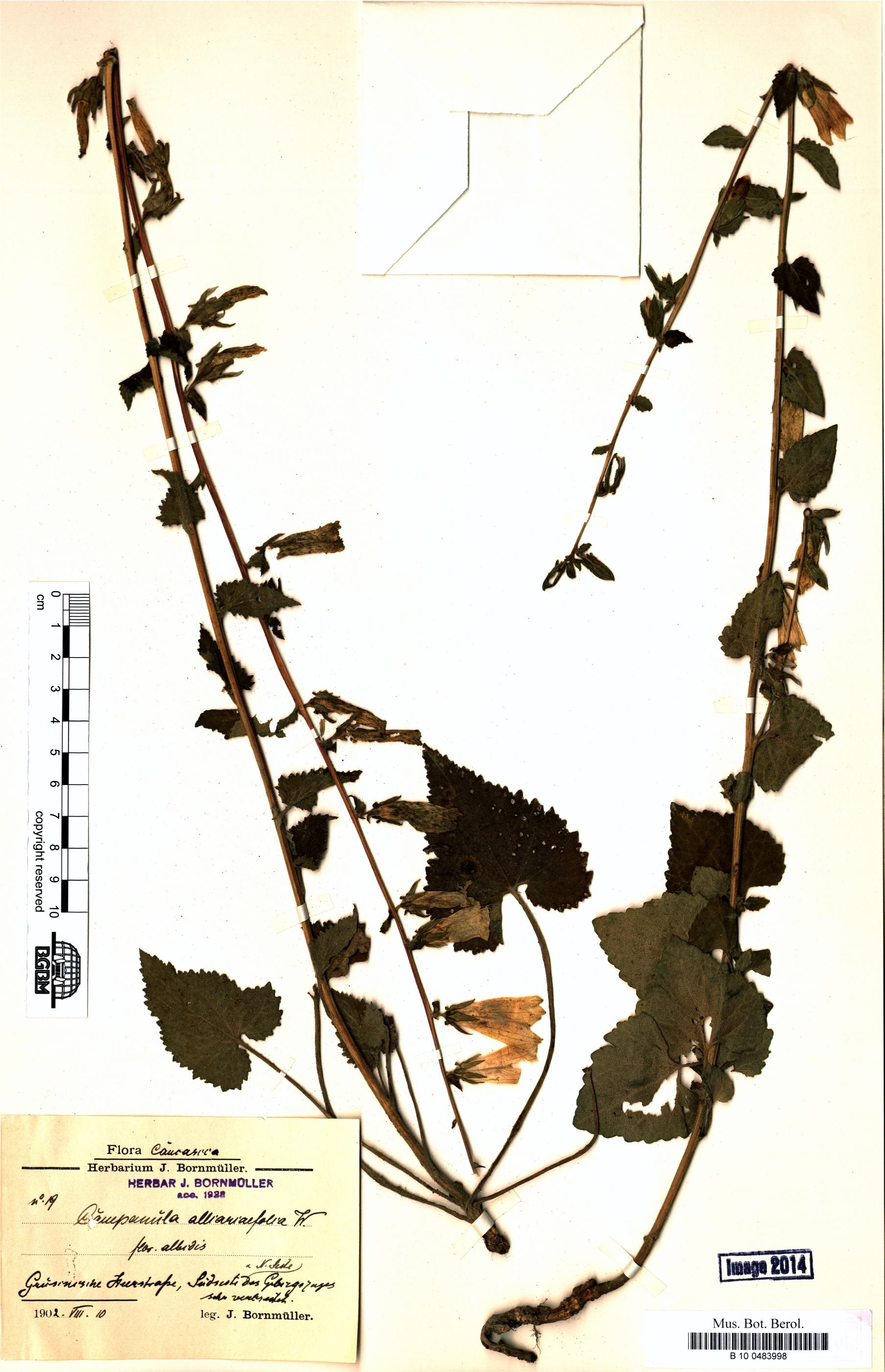 http://ww2.bgbm.org/herbarium/images/B/10/04/83/99/B_10_0483998.jpg