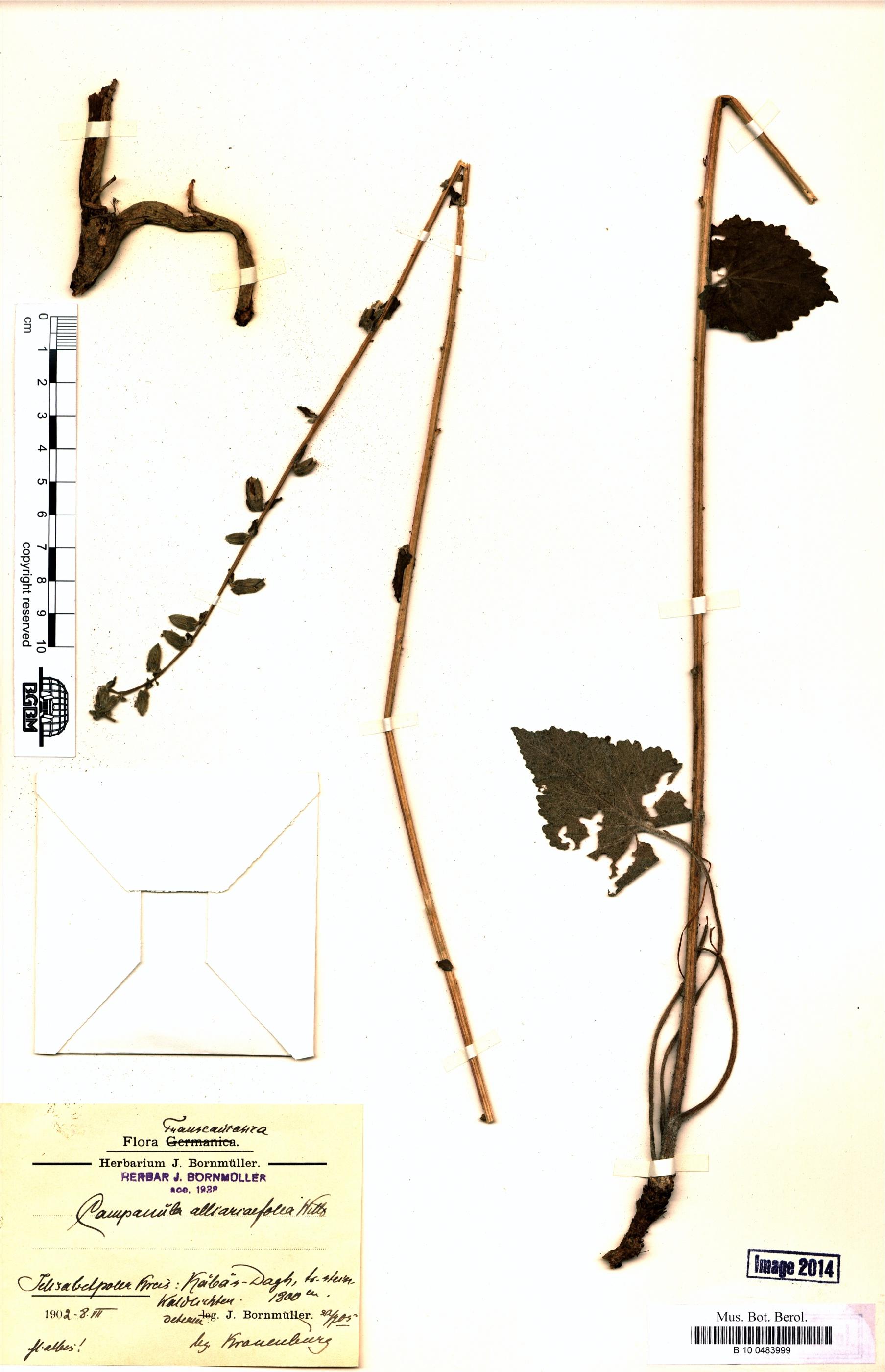 http://ww2.bgbm.org/herbarium/images/B/10/04/83/99/B_10_0483999.jpg