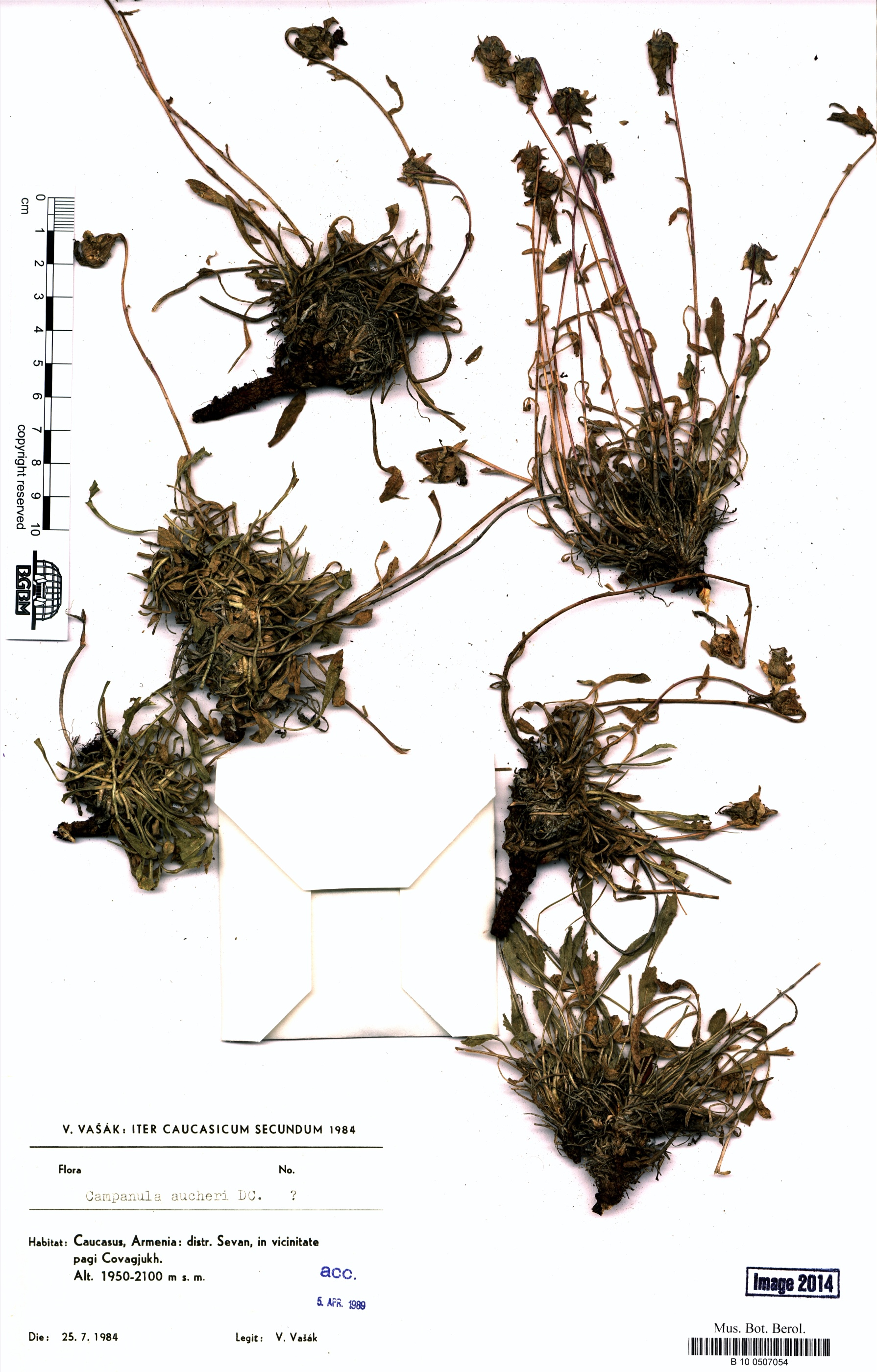 http://ww2.bgbm.org/herbarium/images/B/10/05/07/05/B_10_0507054.jpg