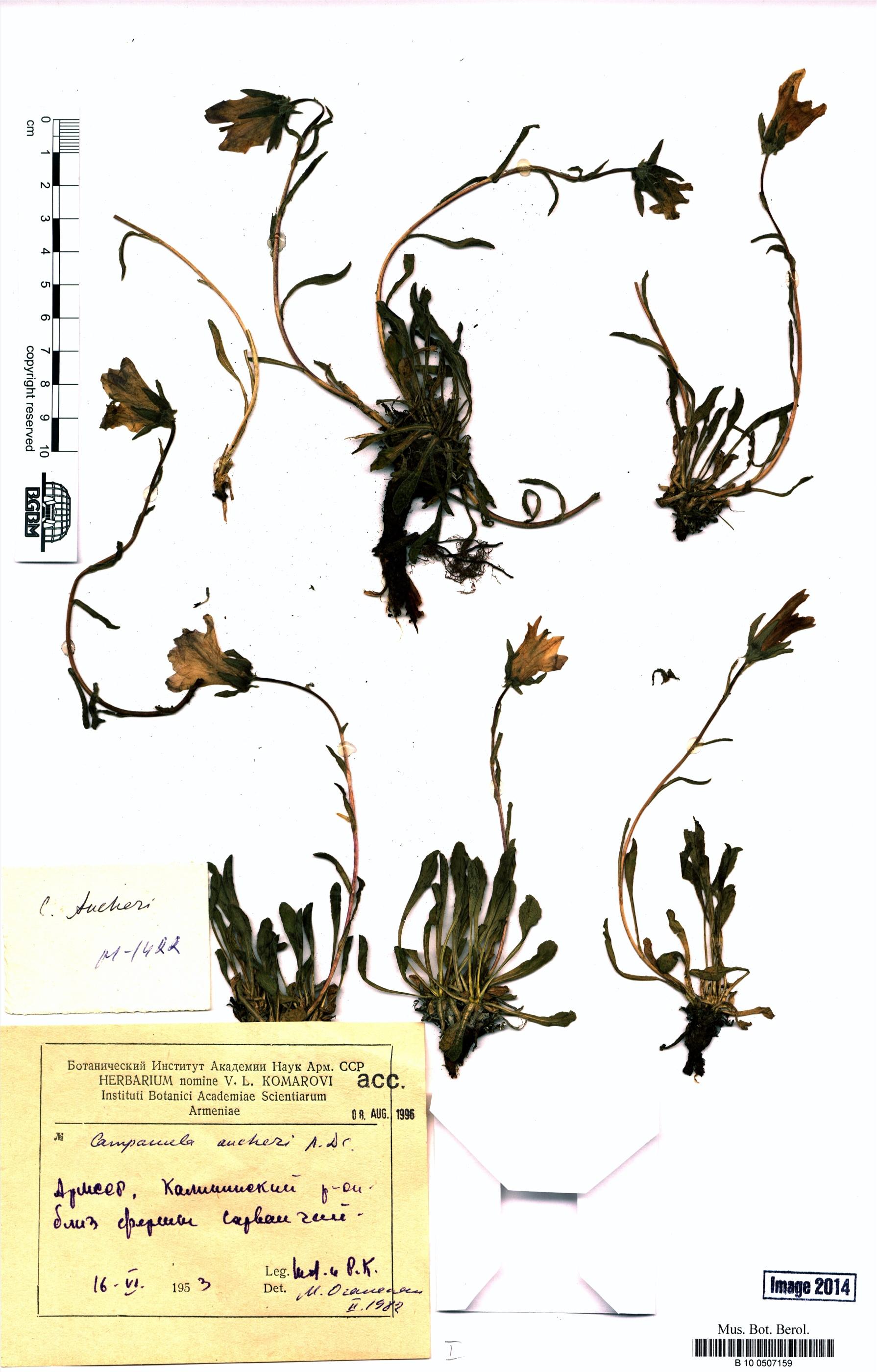 http://ww2.bgbm.org/herbarium/images/B/10/05/07/15/B_10_0507159.jpg