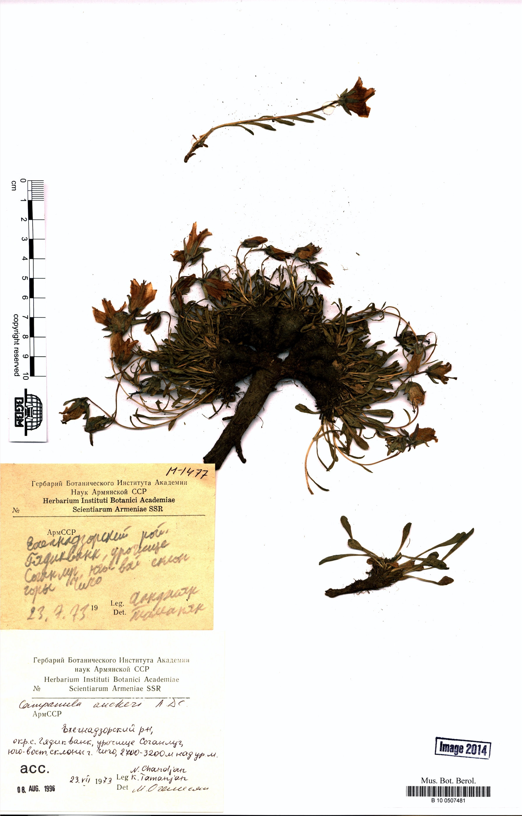 http://ww2.bgbm.org/herbarium/images/B/10/05/07/48/B_10_0507481.jpg