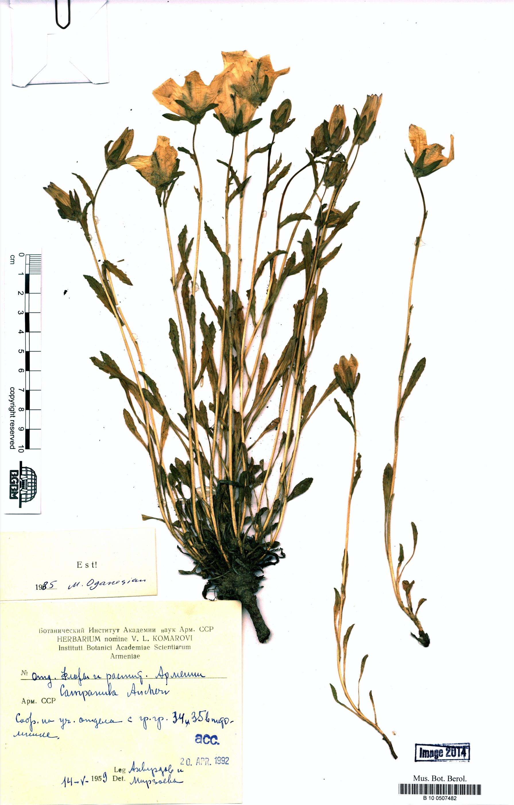 http://ww2.bgbm.org/herbarium/images/B/10/05/07/48/B_10_0507482.jpg