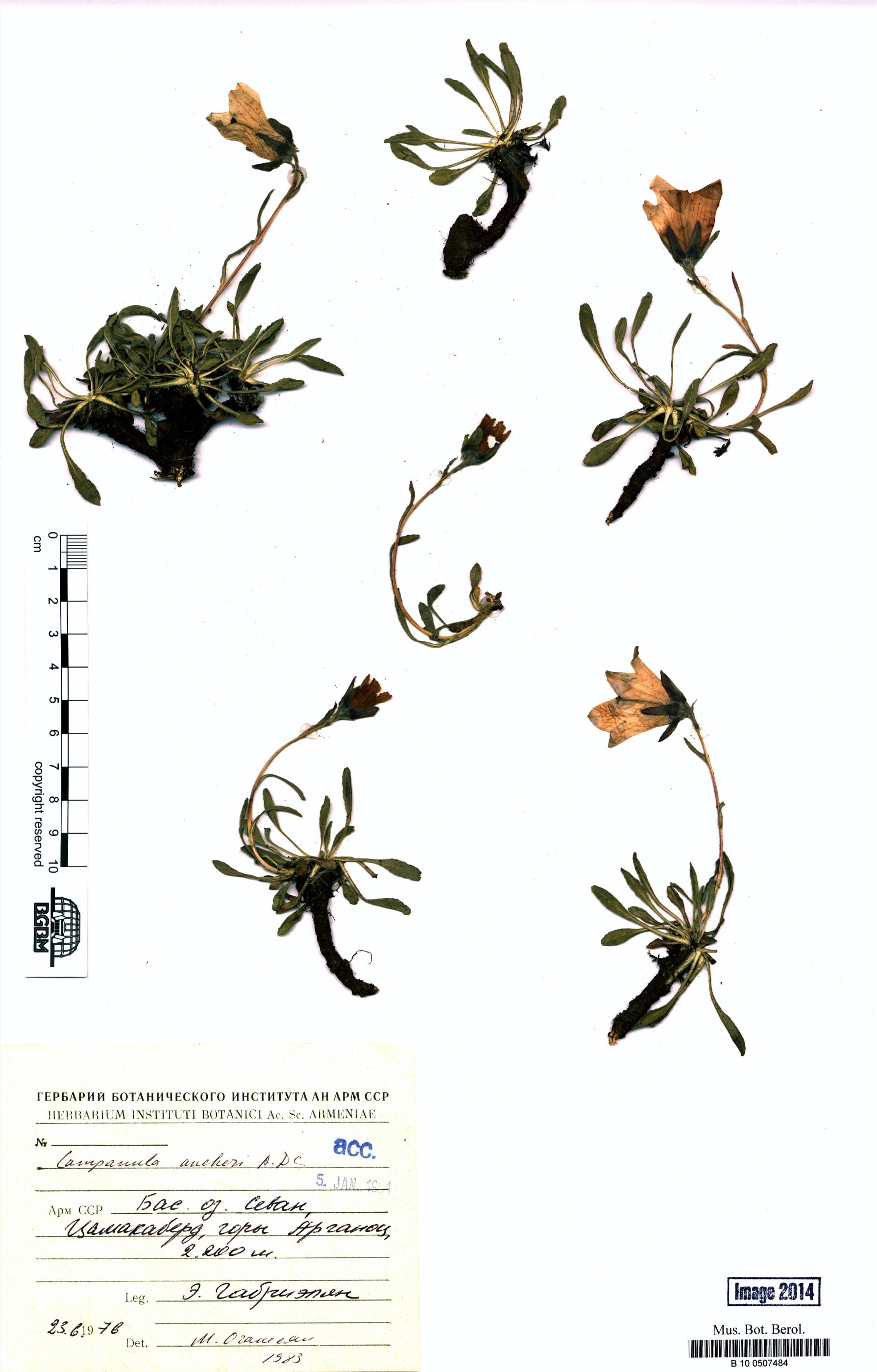 http://ww2.bgbm.org/herbarium/images/B/10/05/07/48/B_10_0507484.jpg