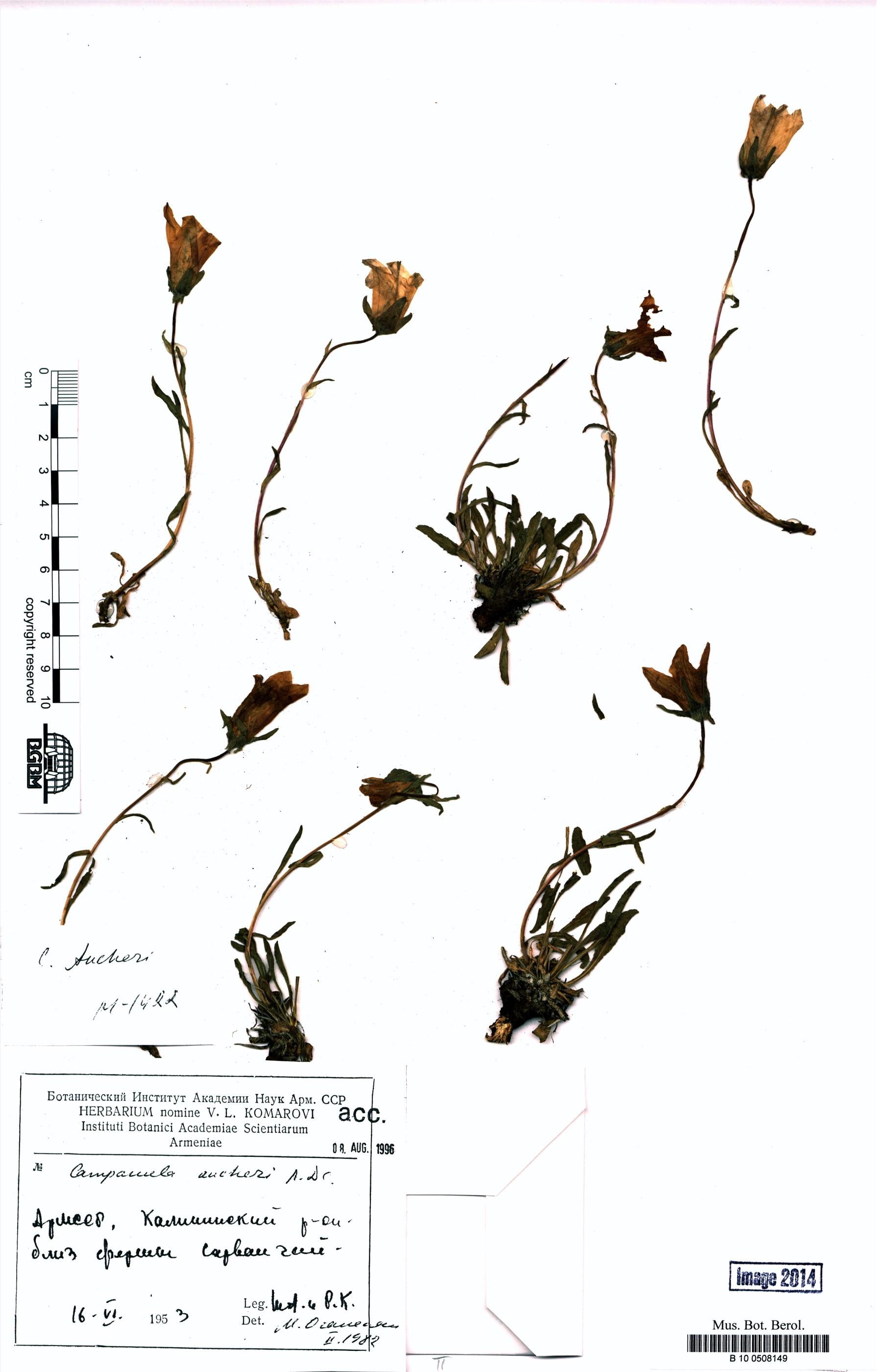 http://ww2.bgbm.org/herbarium/images/B/10/05/08/14/B_10_0508149.jpg