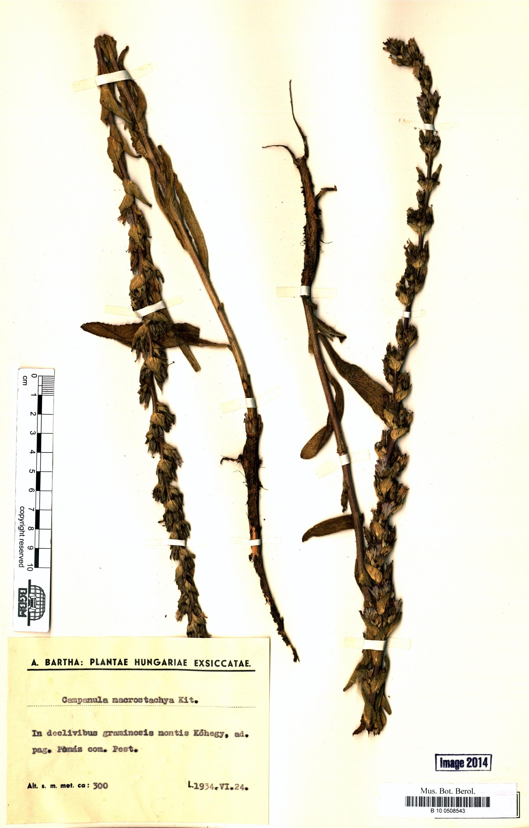 http://ww2.bgbm.org/herbarium/images/B/10/05/08/54/B_10_0508543.jpg