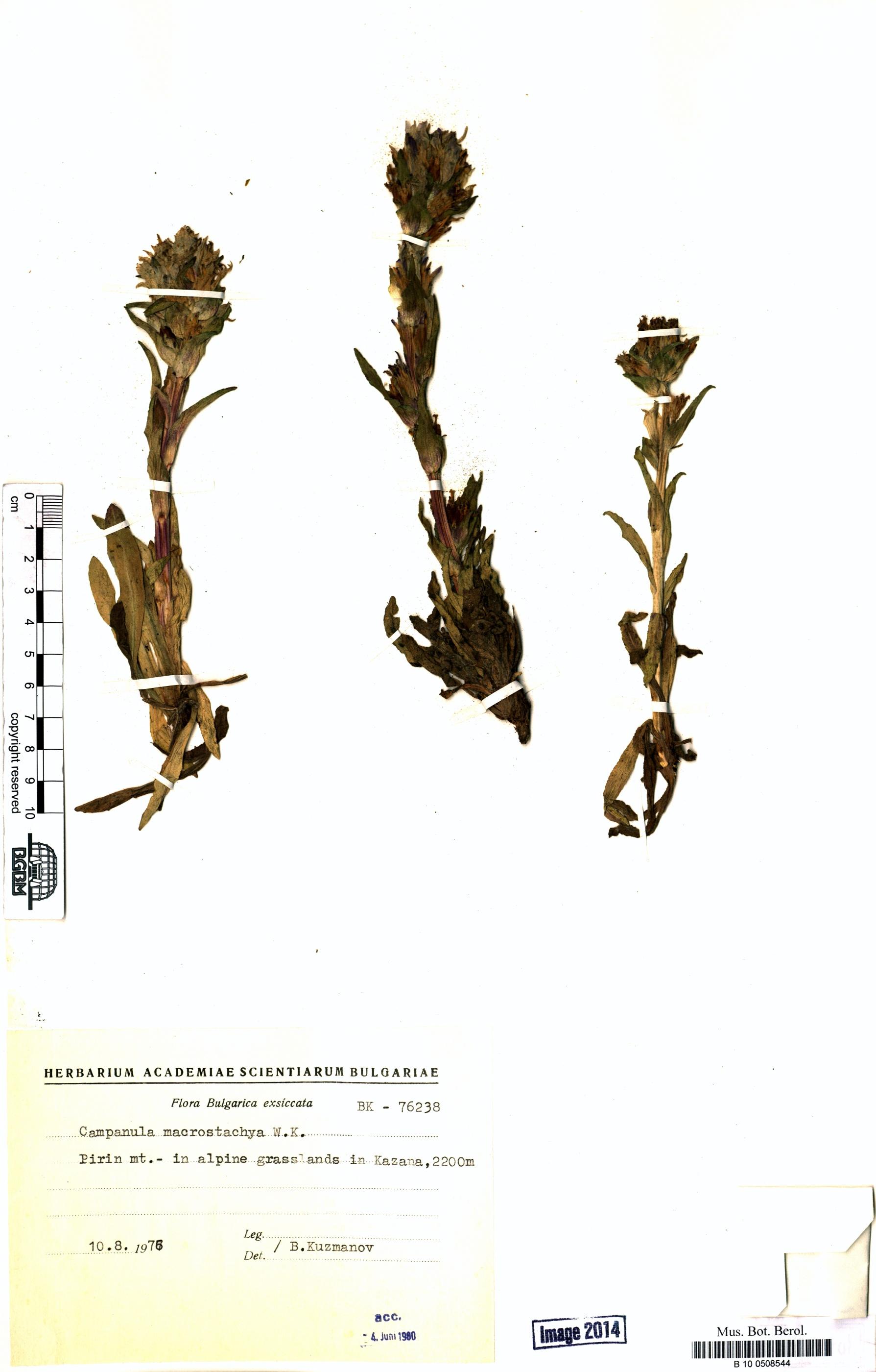 http://ww2.bgbm.org/herbarium/images/B/10/05/08/54/B_10_0508544.jpg