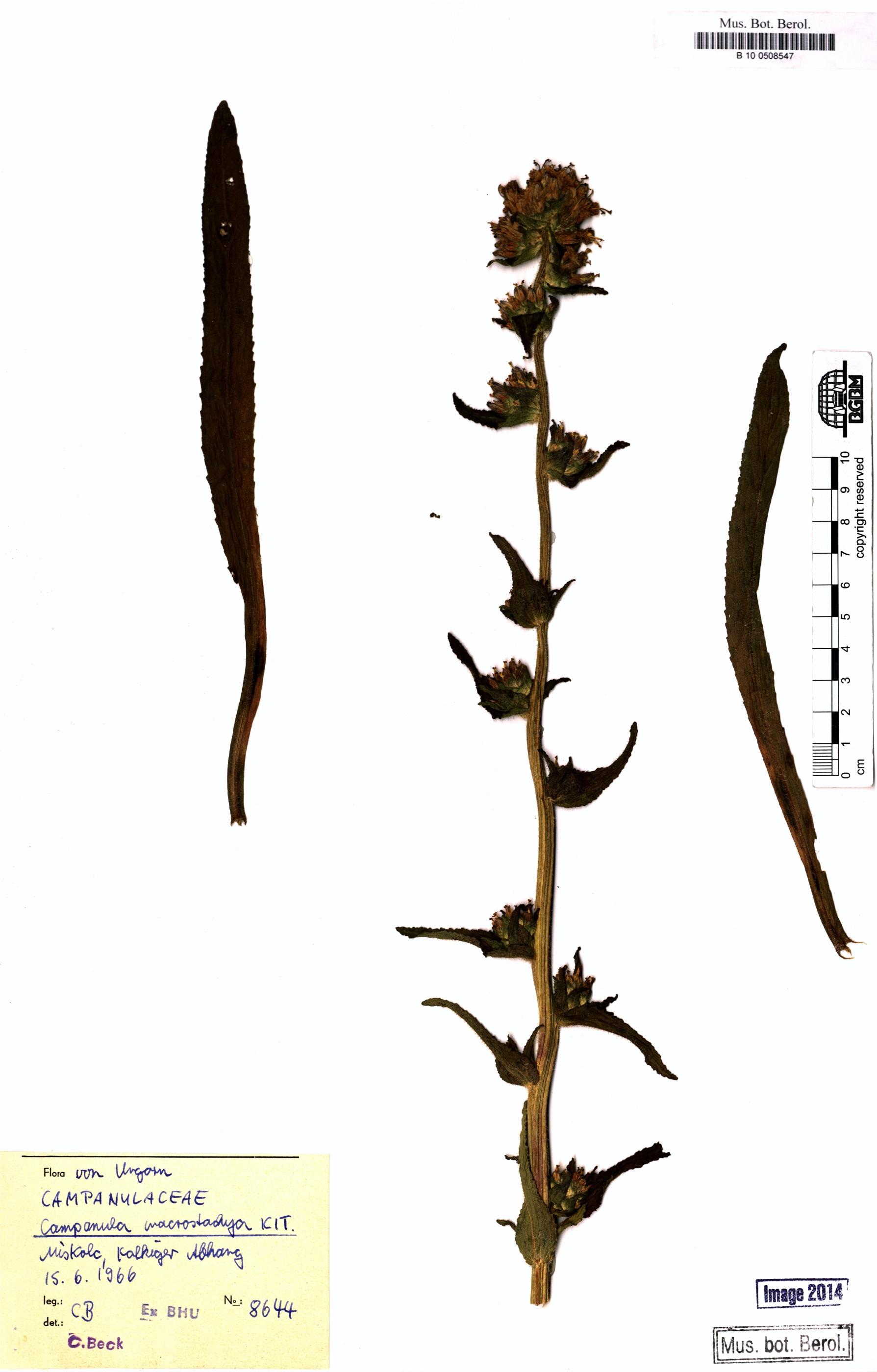 http://ww2.bgbm.org/herbarium/images/B/10/05/08/54/B_10_0508547.jpg