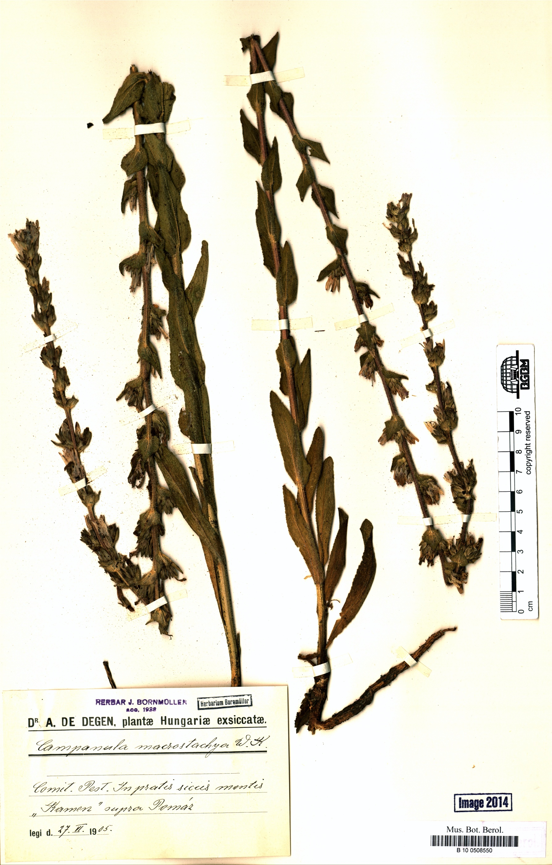 http://ww2.bgbm.org/herbarium/images/B/10/05/08/55/B_10_0508550.jpg