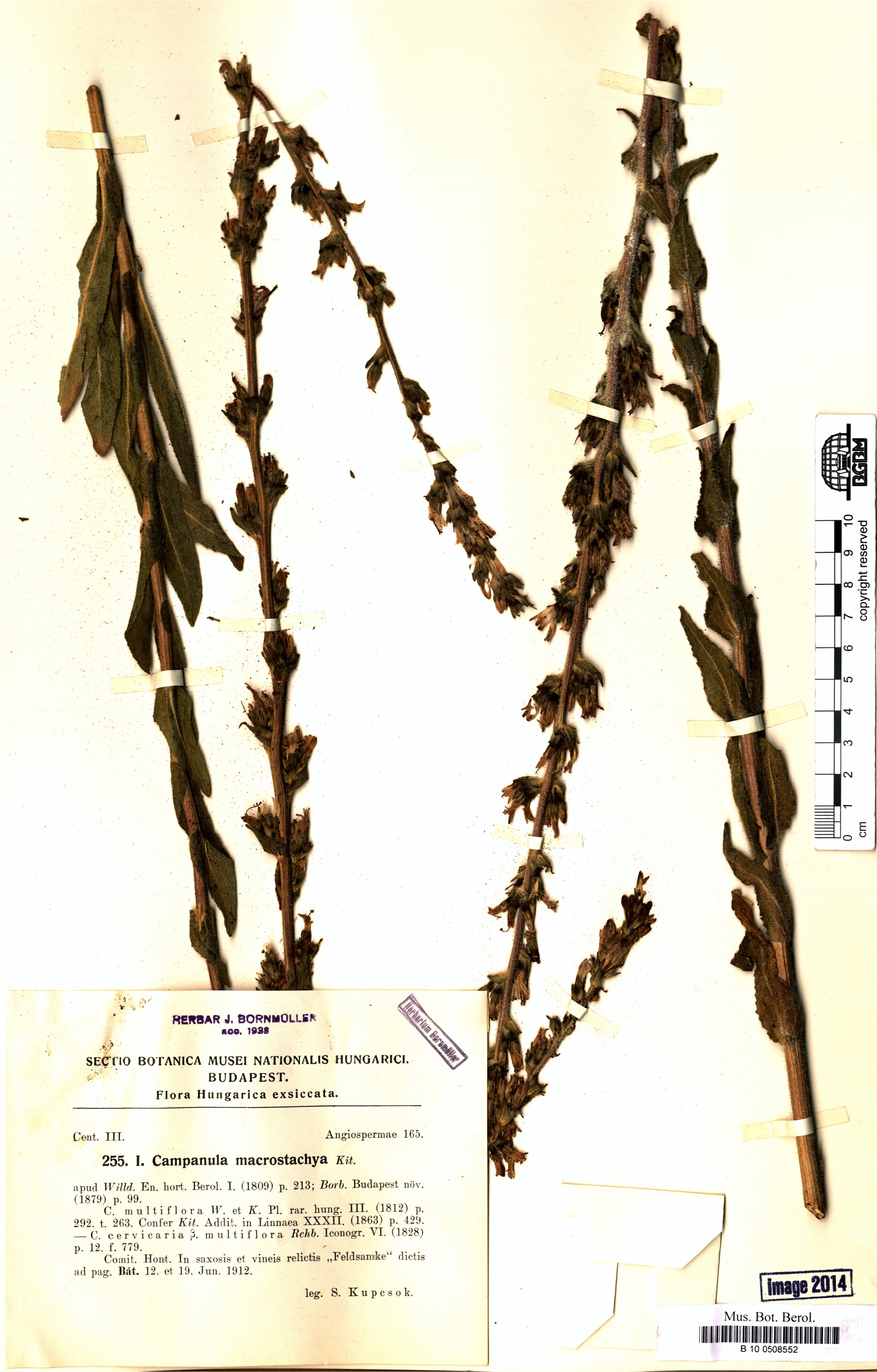 http://ww2.bgbm.org/herbarium/images/B/10/05/08/55/B_10_0508552.jpg