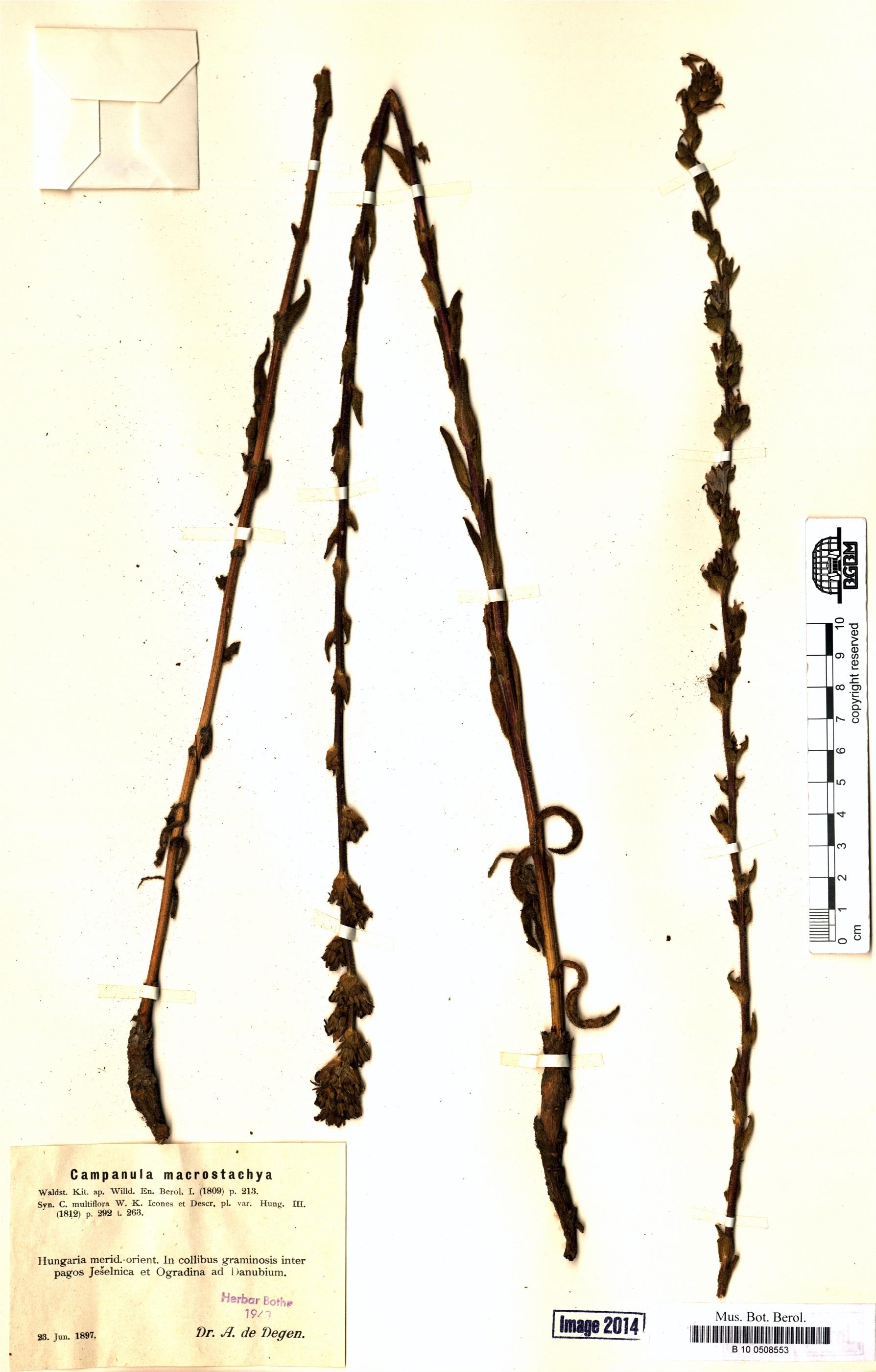 http://ww2.bgbm.org/herbarium/images/B/10/05/08/55/B_10_0508553.jpg