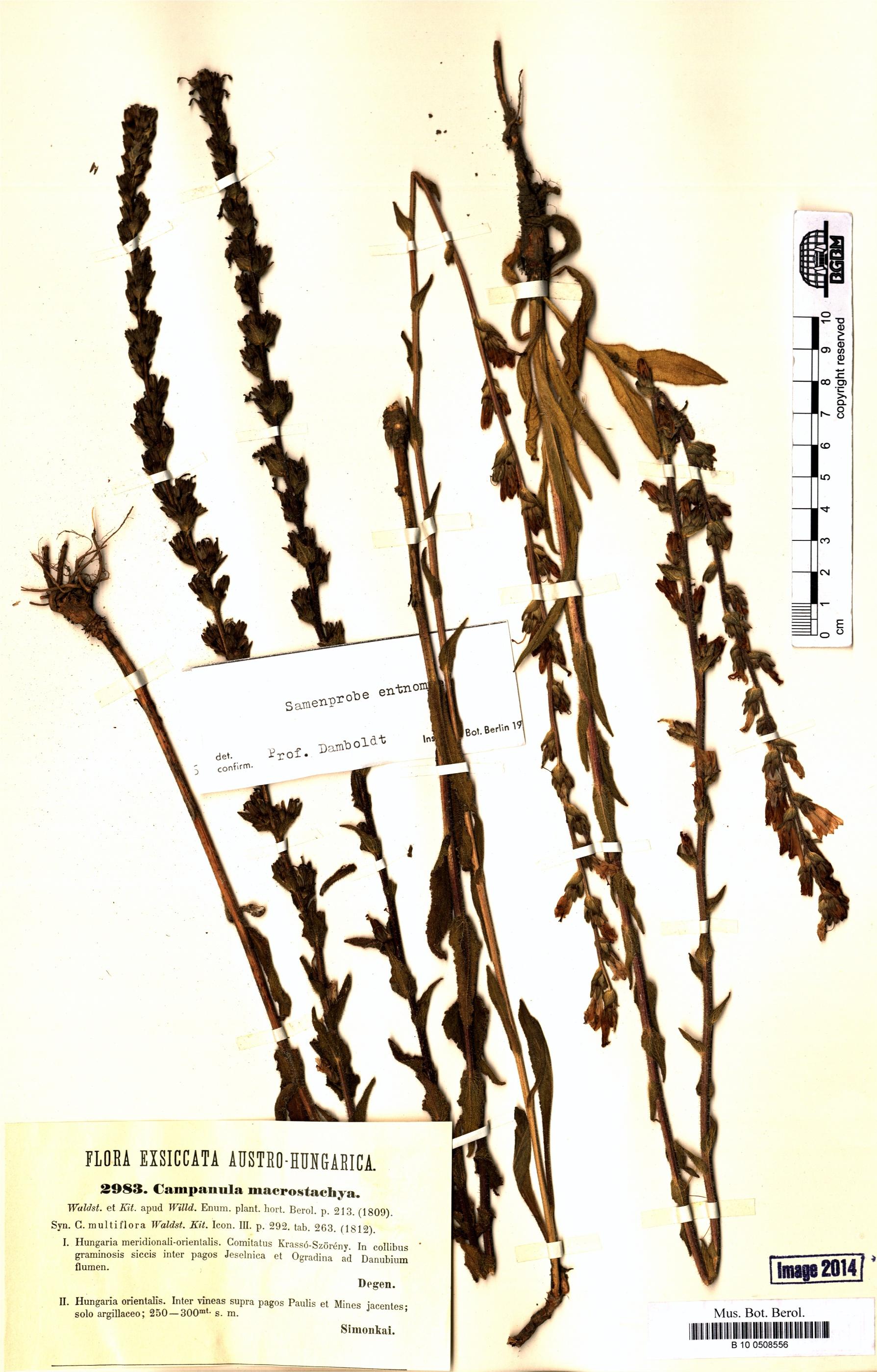 http://ww2.bgbm.org/herbarium/images/B/10/05/08/55/B_10_0508556.jpg