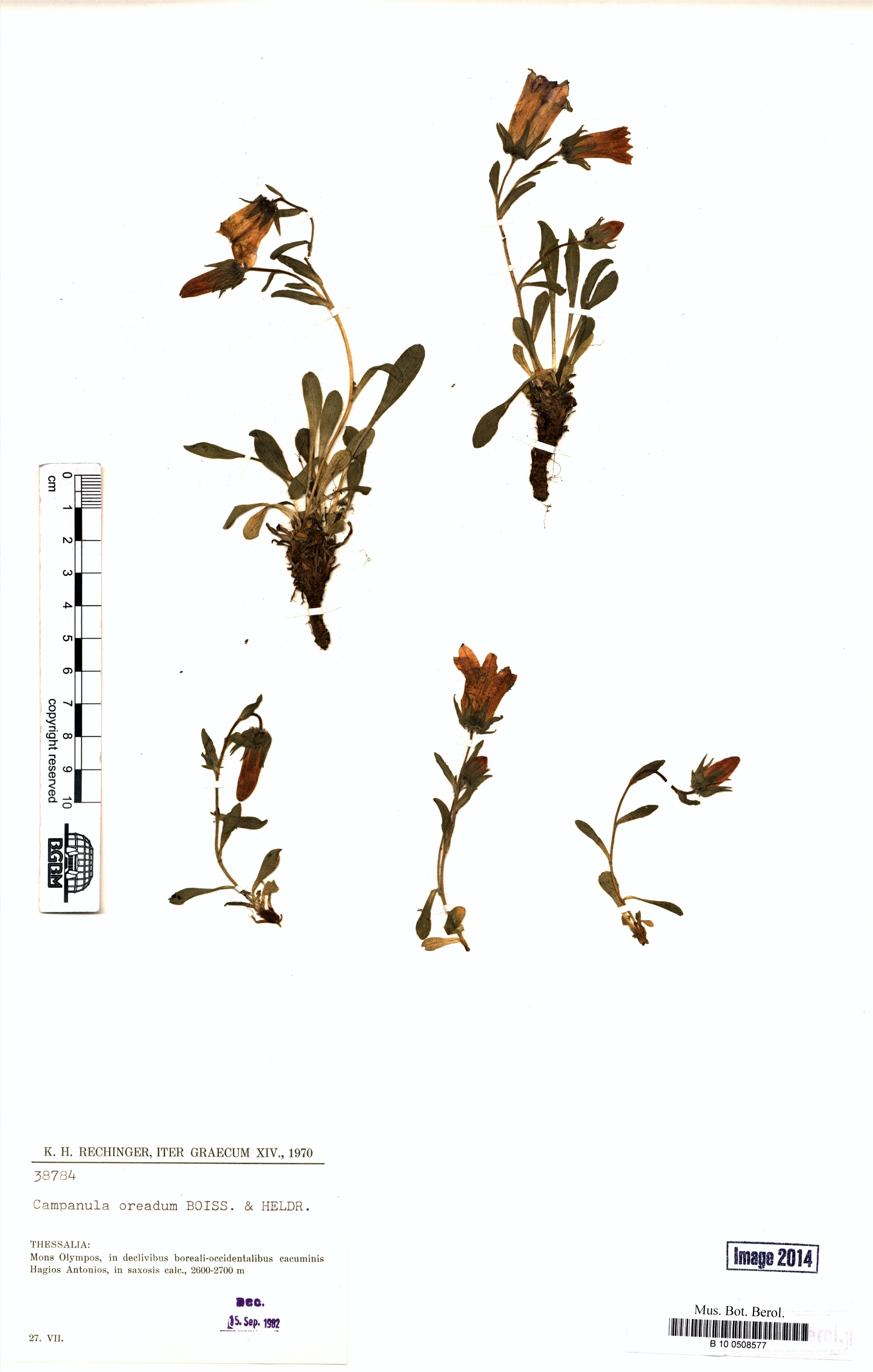 http://ww2.bgbm.org/herbarium/images/B/10/05/08/57/B_10_0508577.jpg