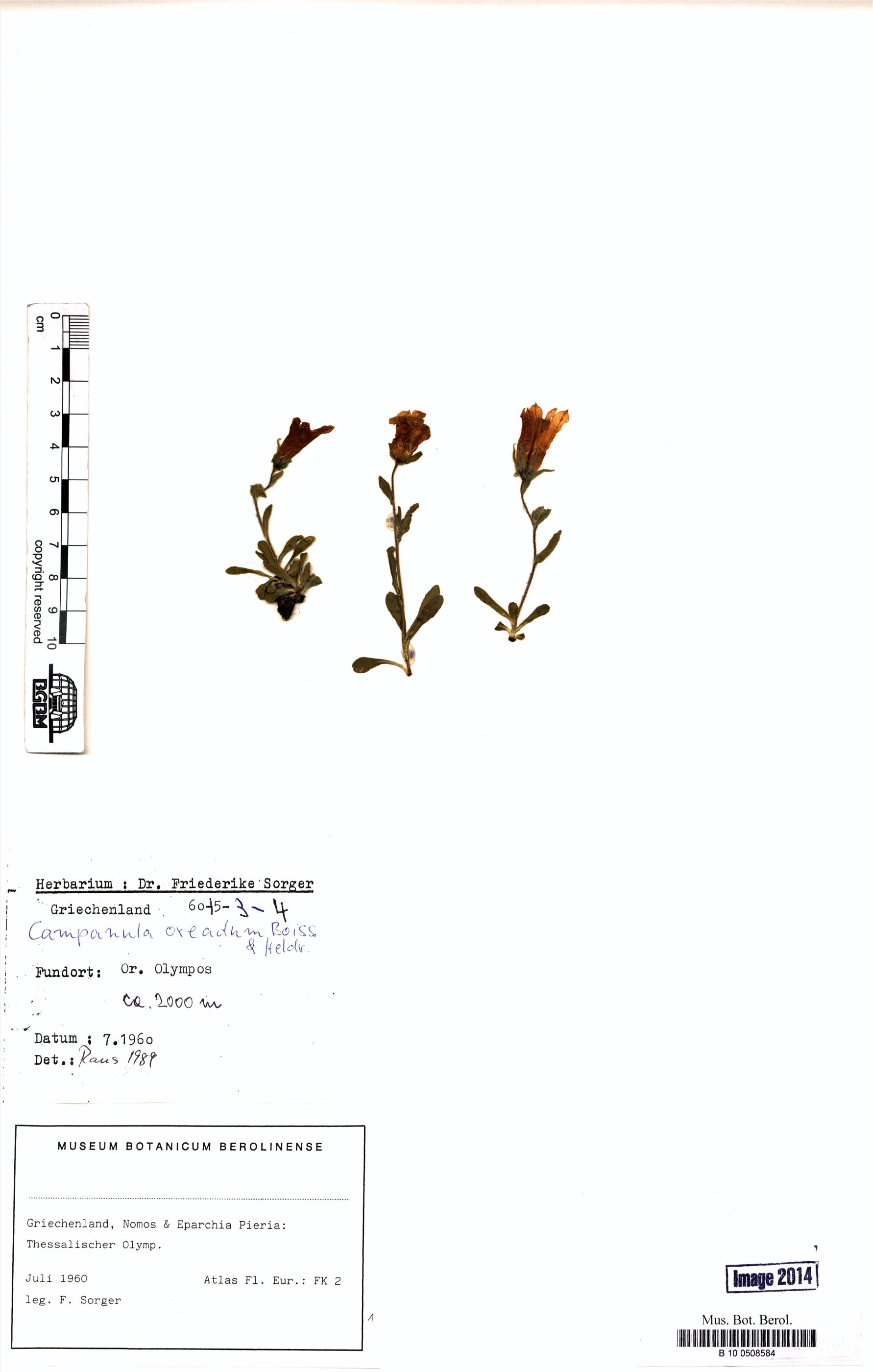 http://ww2.bgbm.org/herbarium/images/B/10/05/08/58/B_10_0508584.jpg