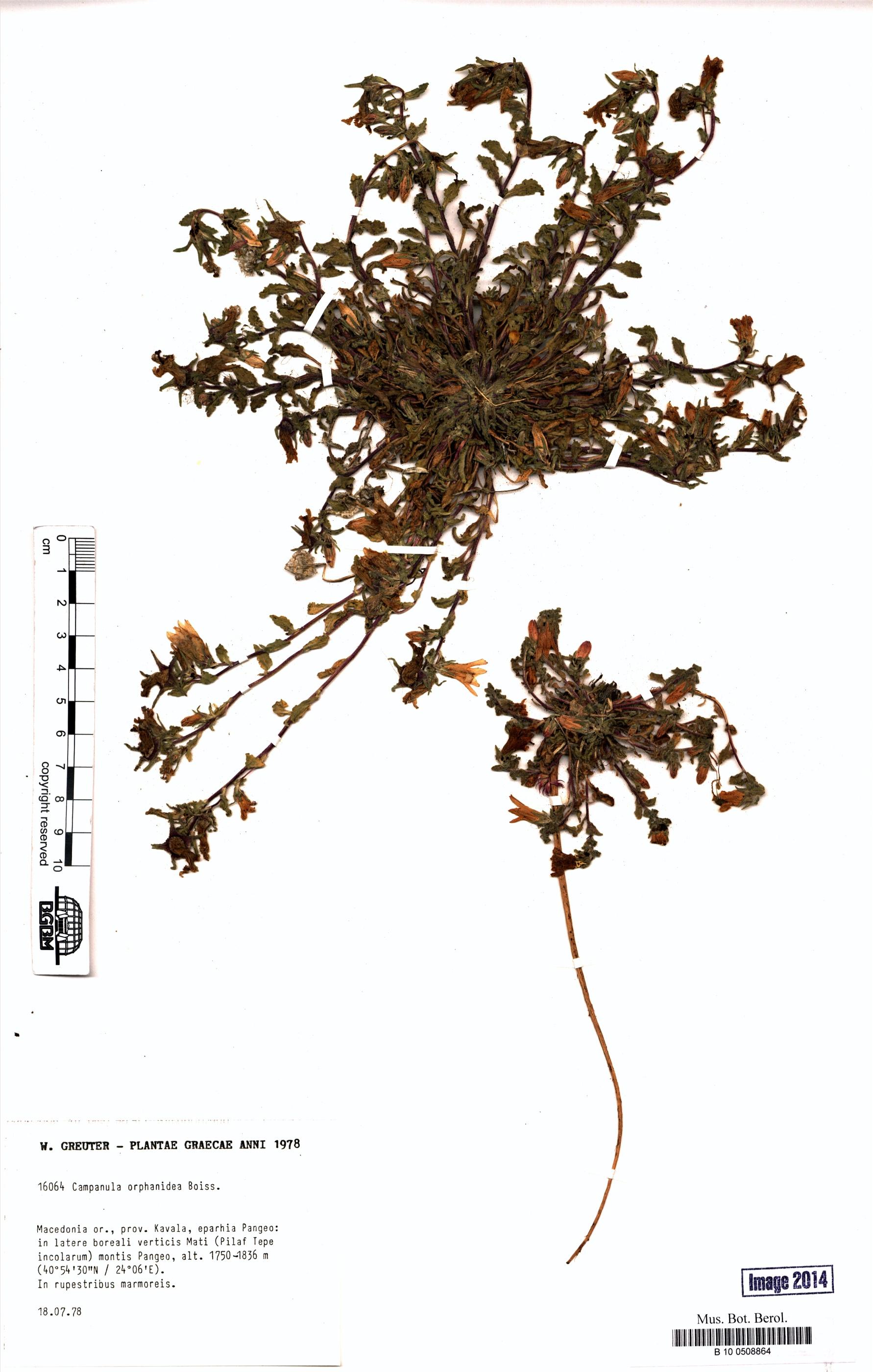 http://ww2.bgbm.org/herbarium/images/B/10/05/08/86/B_10_0508864.jpg