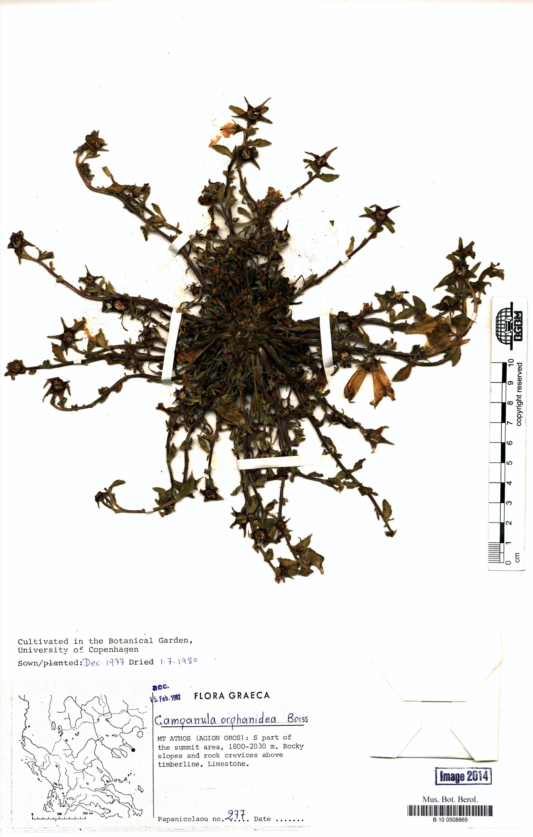 http://ww2.bgbm.org/herbarium/images/B/10/05/08/86/B_10_0508865.jpg