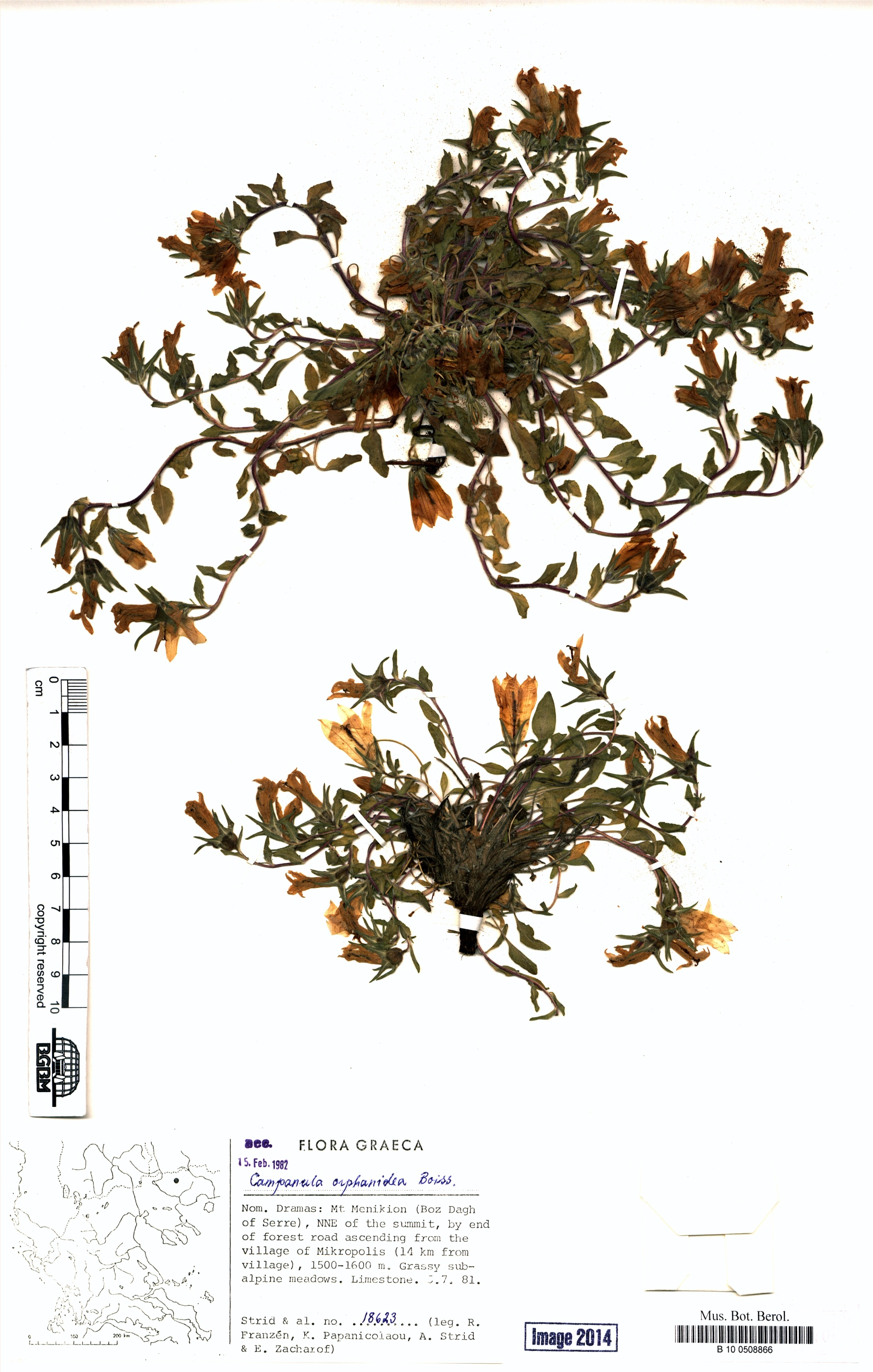http://ww2.bgbm.org/herbarium/images/B/10/05/08/86/B_10_0508866.jpg