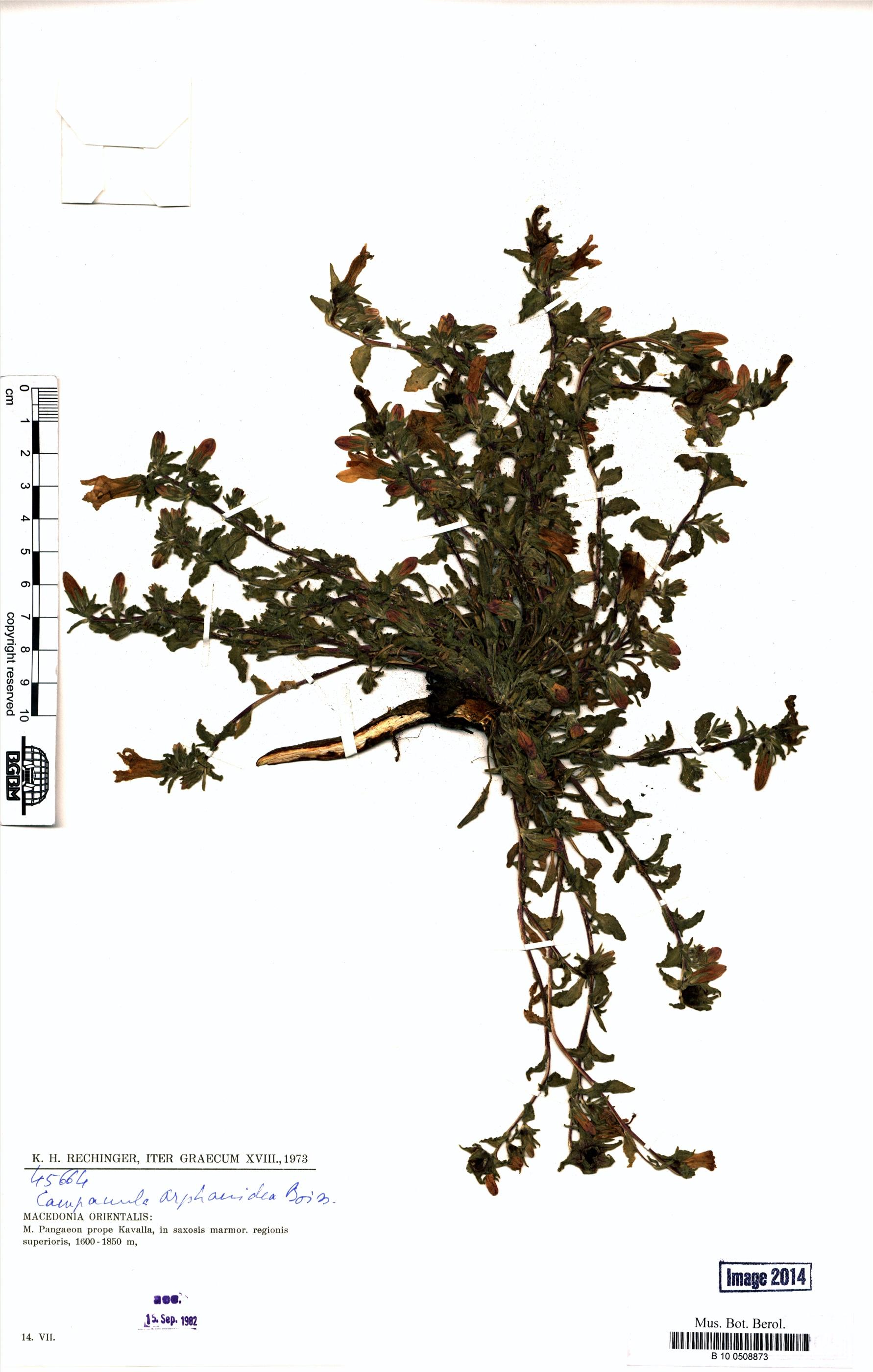 http://ww2.bgbm.org/herbarium/images/B/10/05/08/87/B_10_0508873.jpg
