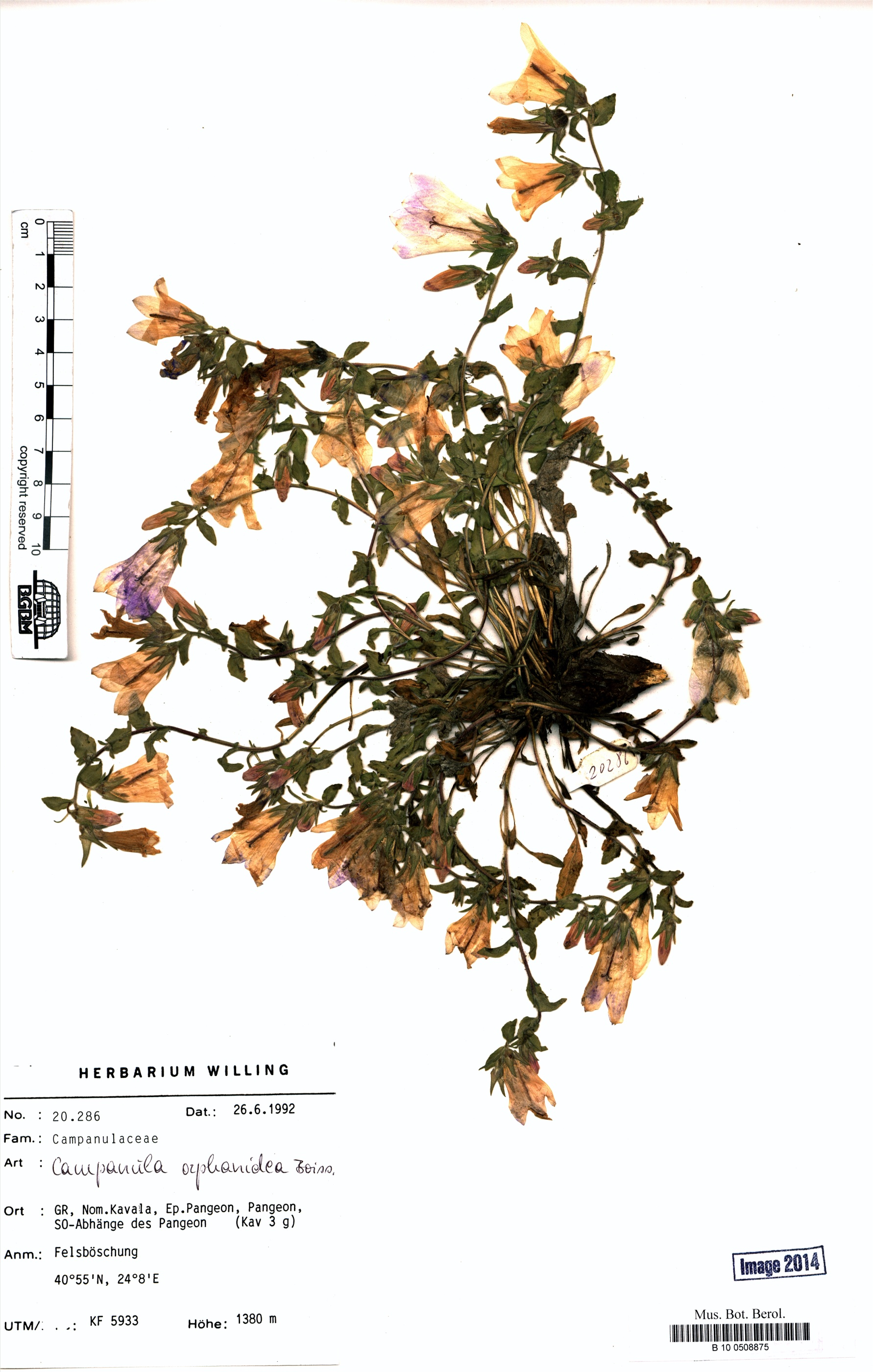 http://ww2.bgbm.org/herbarium/images/B/10/05/08/87/B_10_0508875.jpg