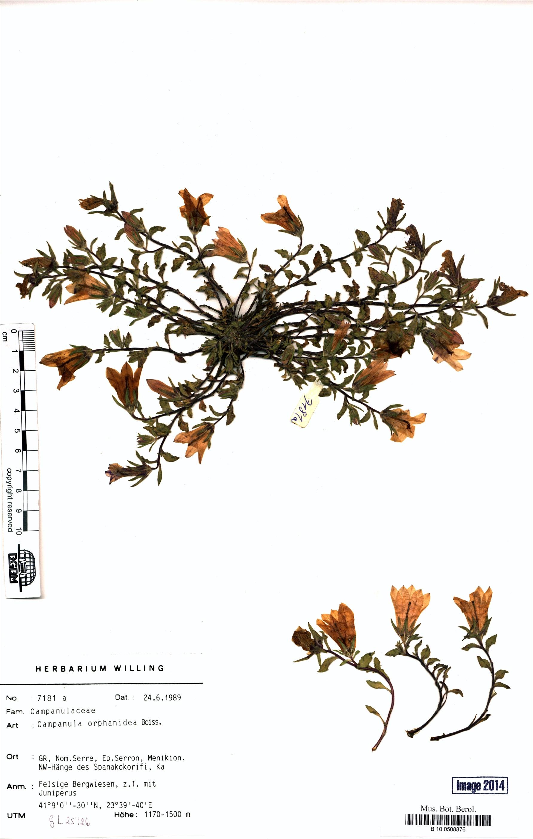 http://ww2.bgbm.org/herbarium/images/B/10/05/08/87/B_10_0508876.jpg