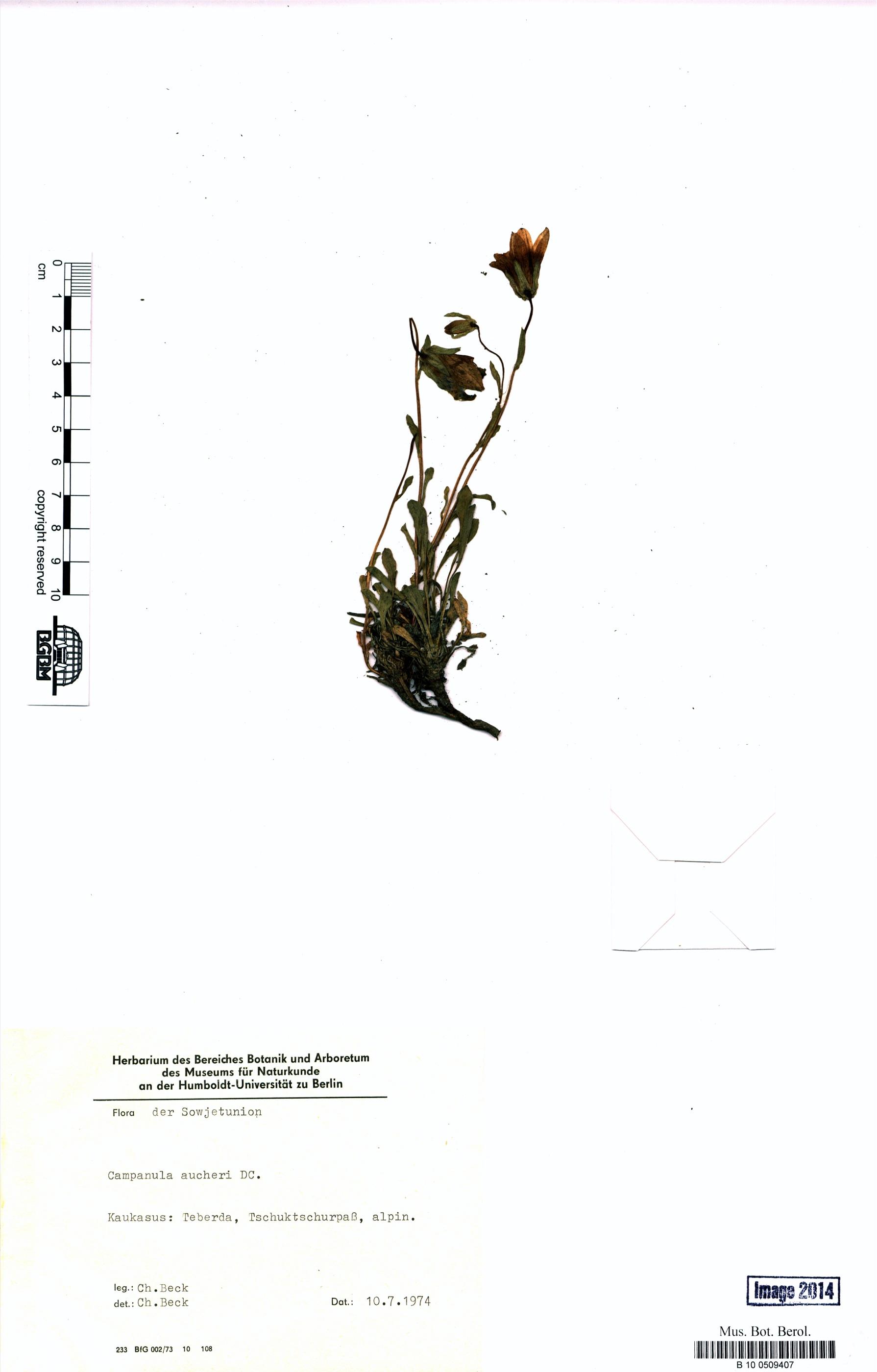 http://ww2.bgbm.org/herbarium/images/B/10/05/09/40/B_10_0509407.jpg