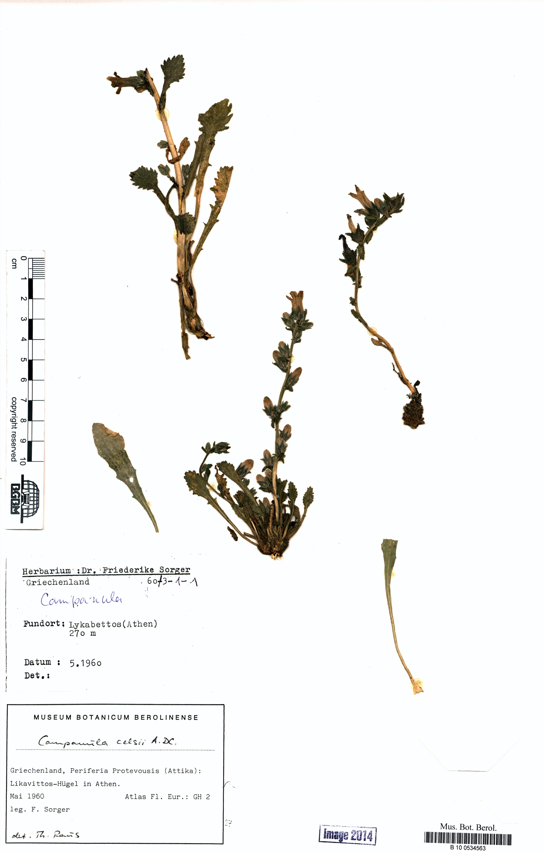 http://ww2.bgbm.org/herbarium/images/B/10/05/34/56/B_10_0534563.jpg
