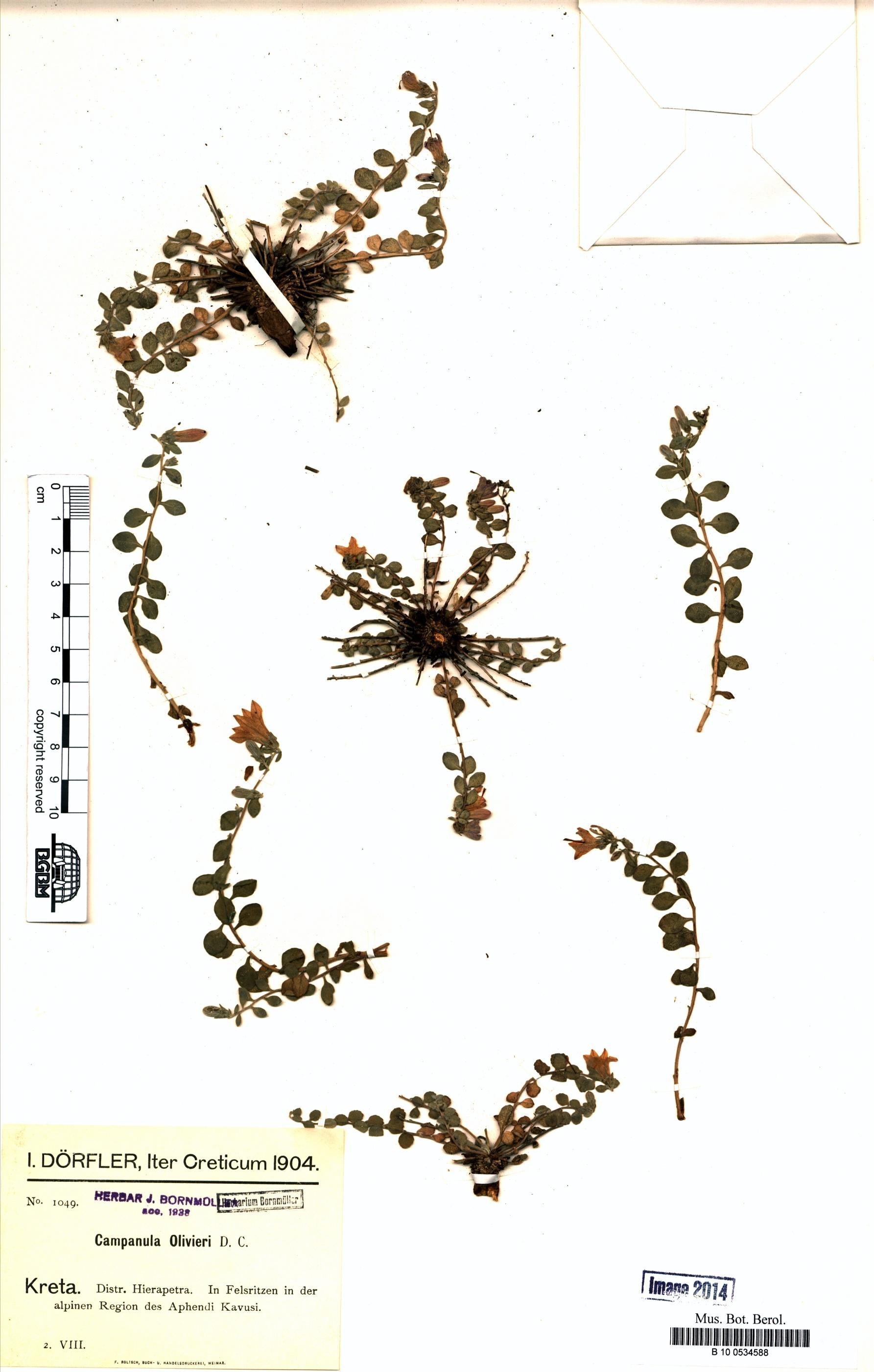http://ww2.bgbm.org/herbarium/images/B/10/05/34/58/B_10_0534588.jpg