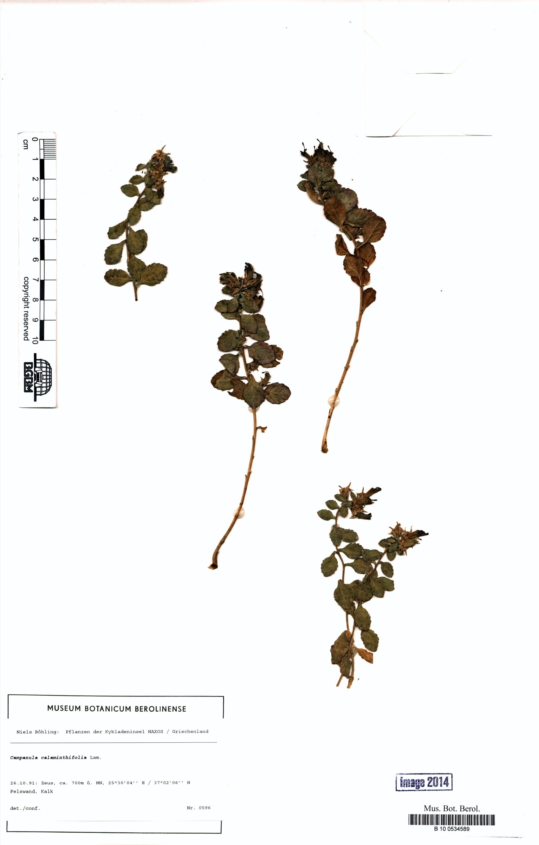 http://ww2.bgbm.org/herbarium/images/B/10/05/34/58/B_10_0534589.jpg