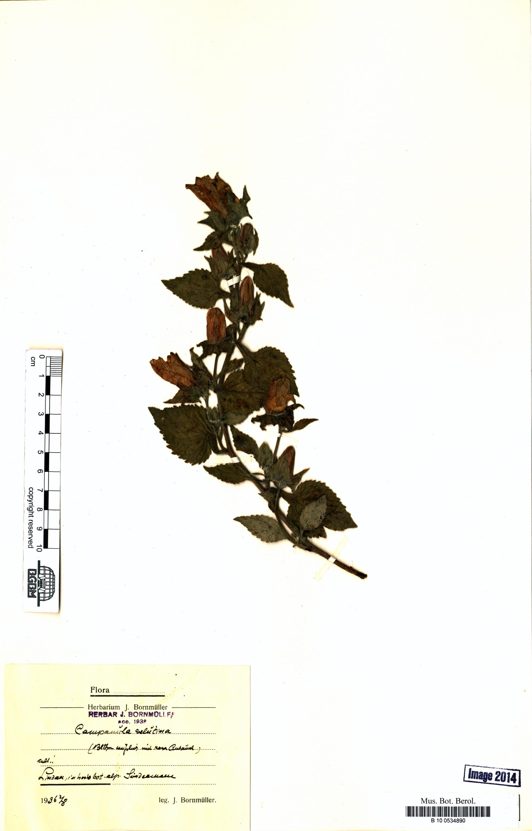 http://ww2.bgbm.org/herbarium/images/B/10/05/34/89/B_10_0534890.jpg