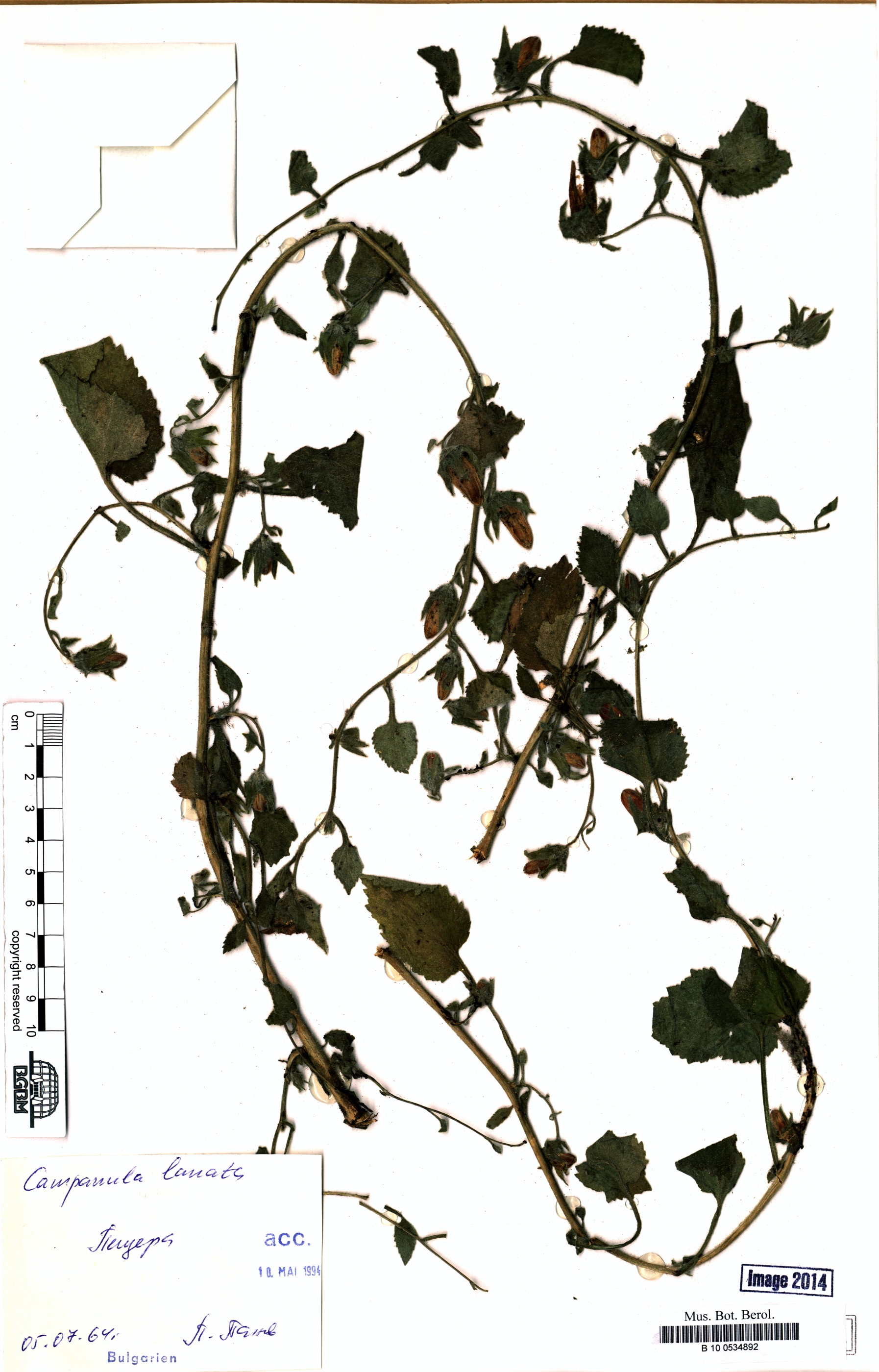 http://ww2.bgbm.org/herbarium/images/B/10/05/34/89/B_10_0534892.jpg