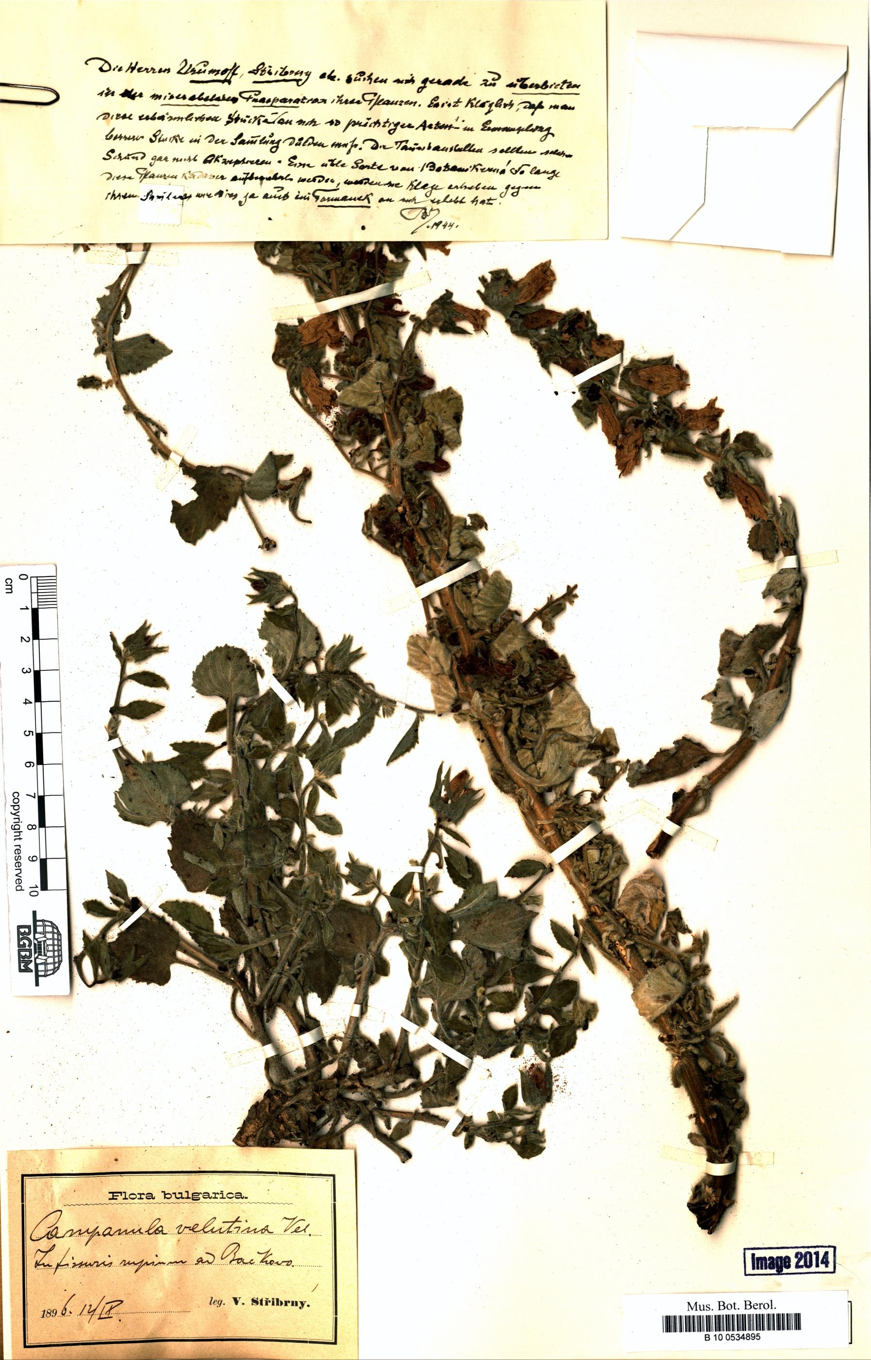 http://ww2.bgbm.org/herbarium/images/B/10/05/34/89/B_10_0534895.jpg