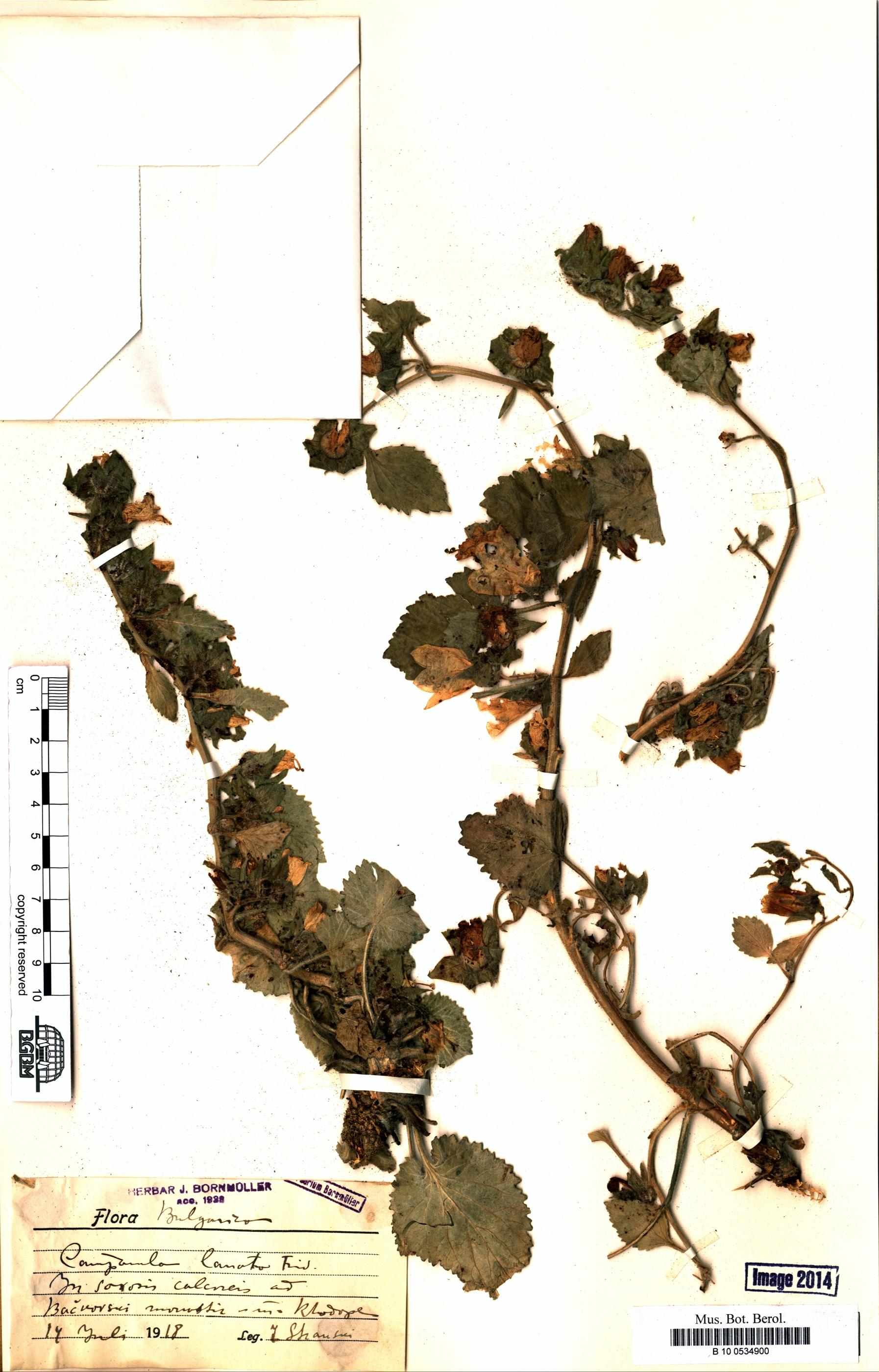 http://ww2.bgbm.org/herbarium/images/B/10/05/34/90/B_10_0534900.jpg