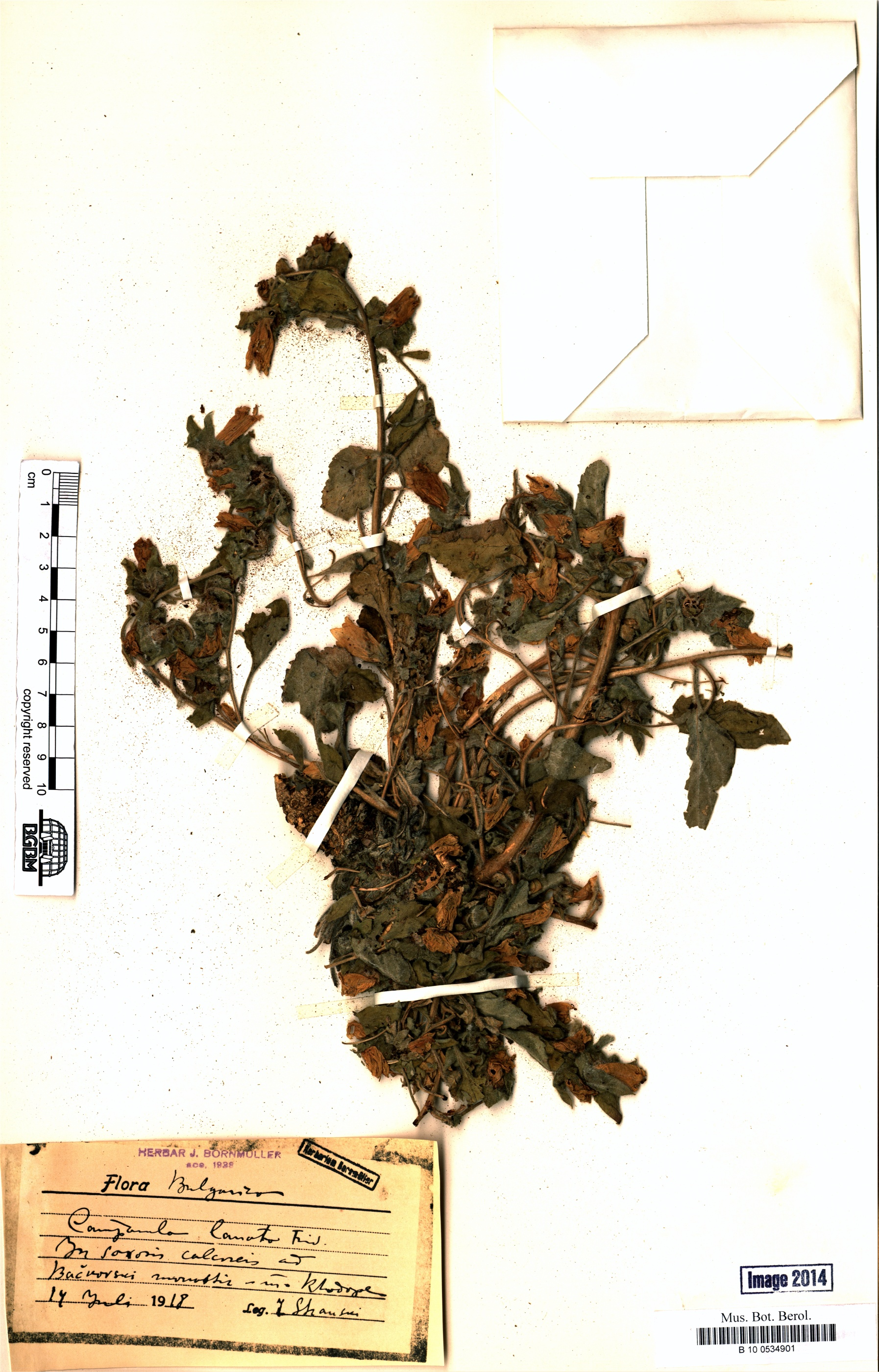 http://ww2.bgbm.org/herbarium/images/B/10/05/34/90/B_10_0534901.jpg