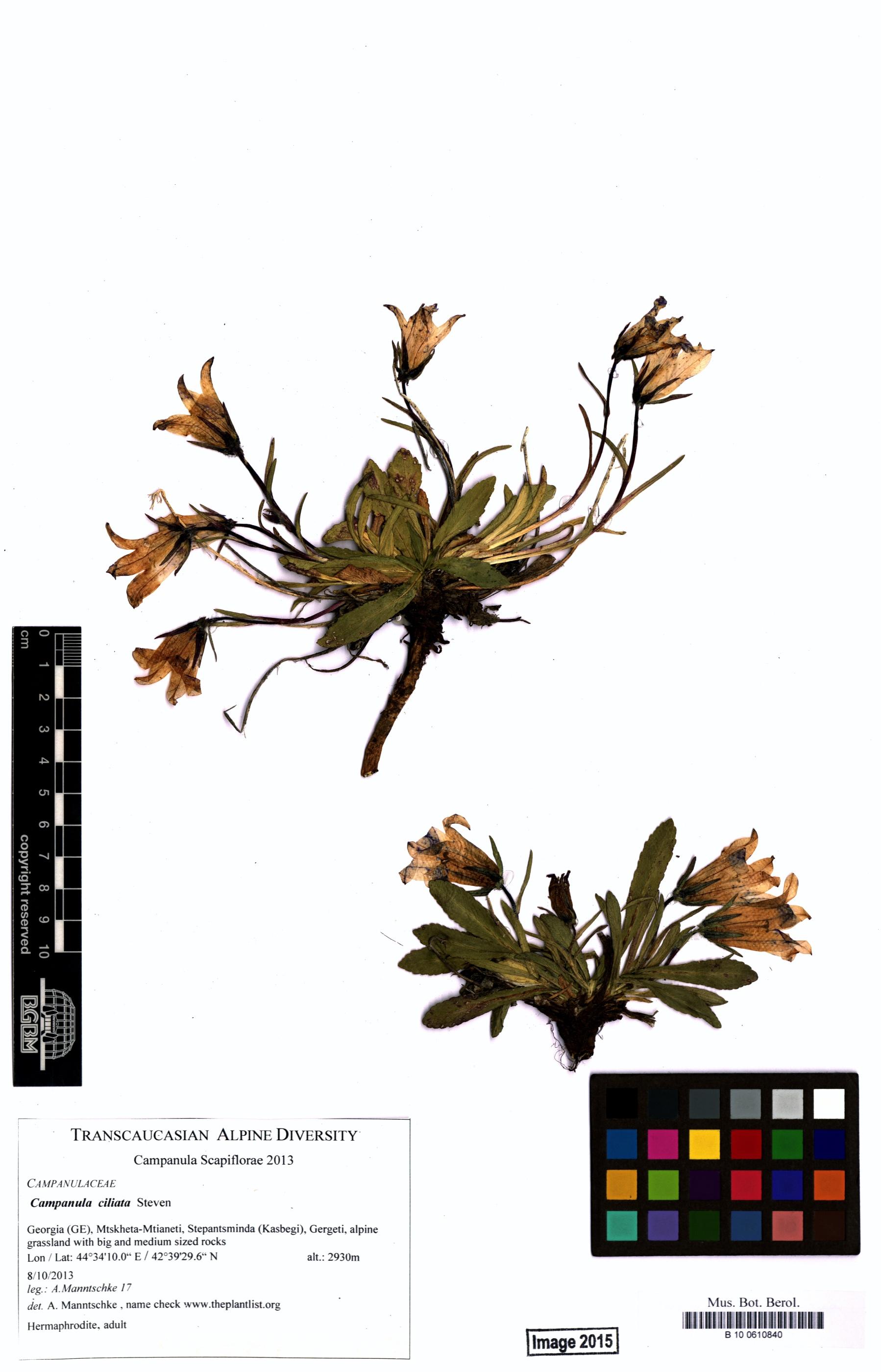 http://ww2.bgbm.org/herbarium/images/B/10/06/10/84/B_10_0610840.jpg