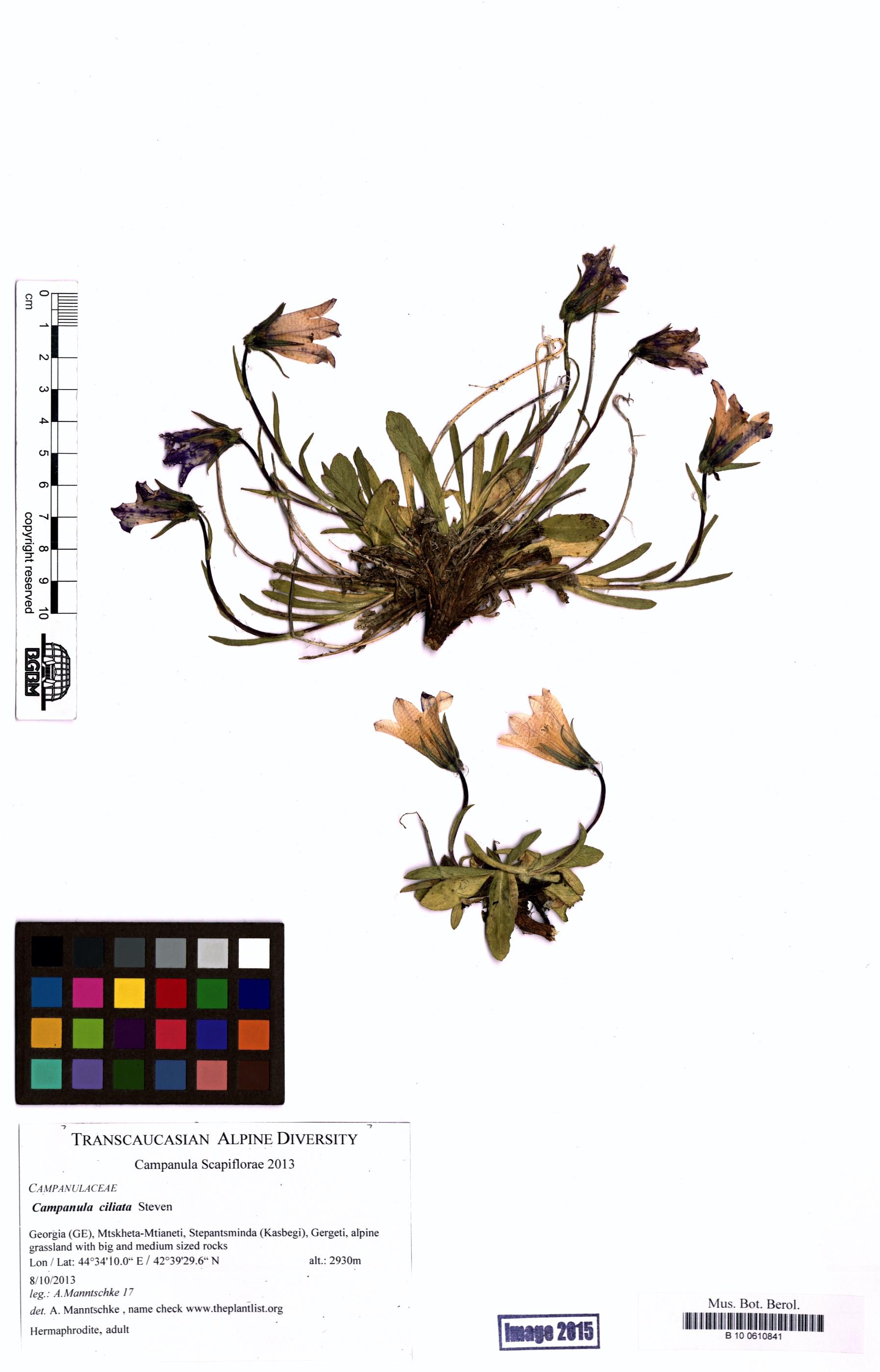 http://ww2.bgbm.org/herbarium/images/B/10/06/10/84/B_10_0610841.jpg