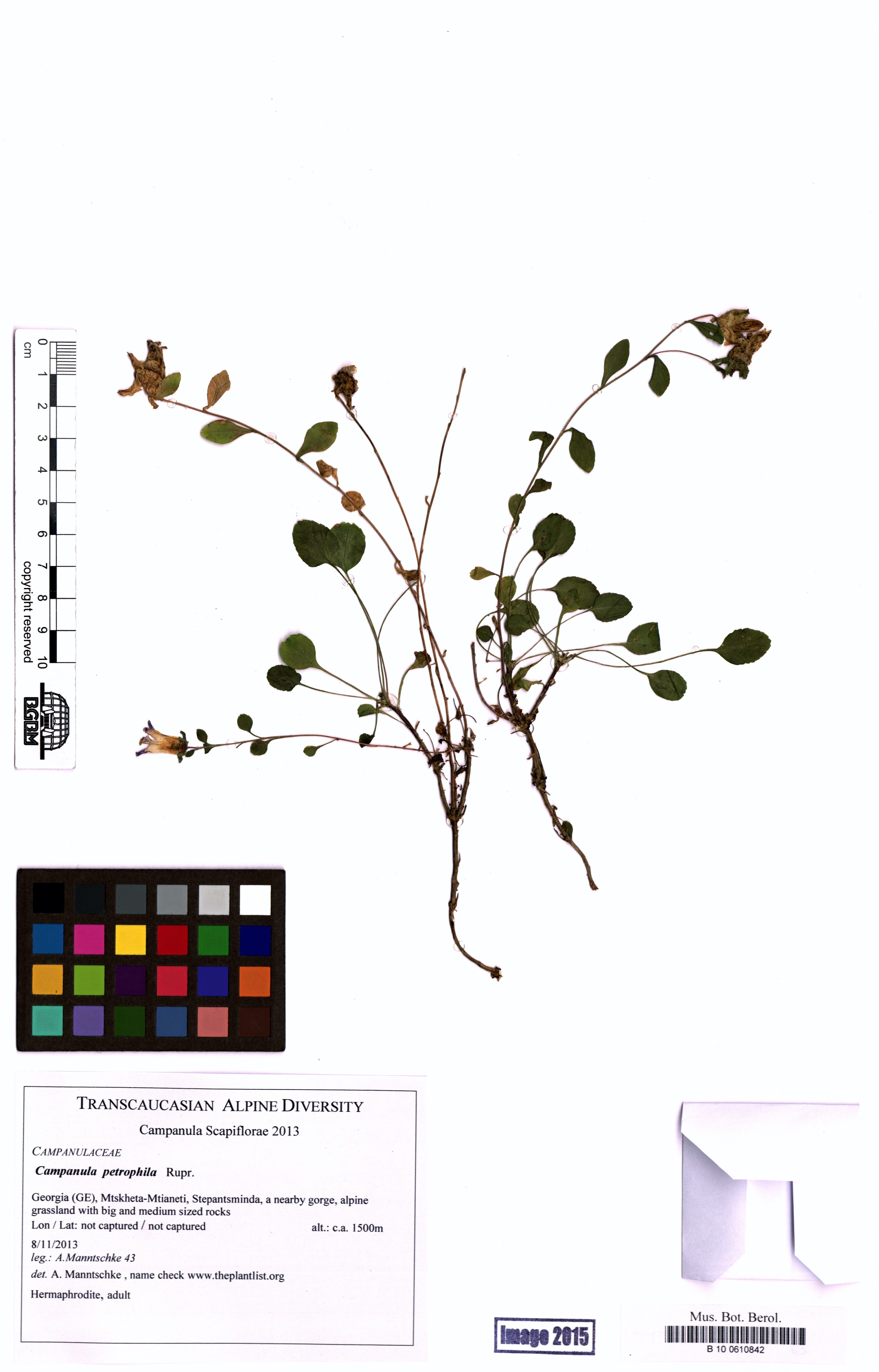 http://ww2.bgbm.org/herbarium/images/B/10/06/10/84/B_10_0610842.jpg