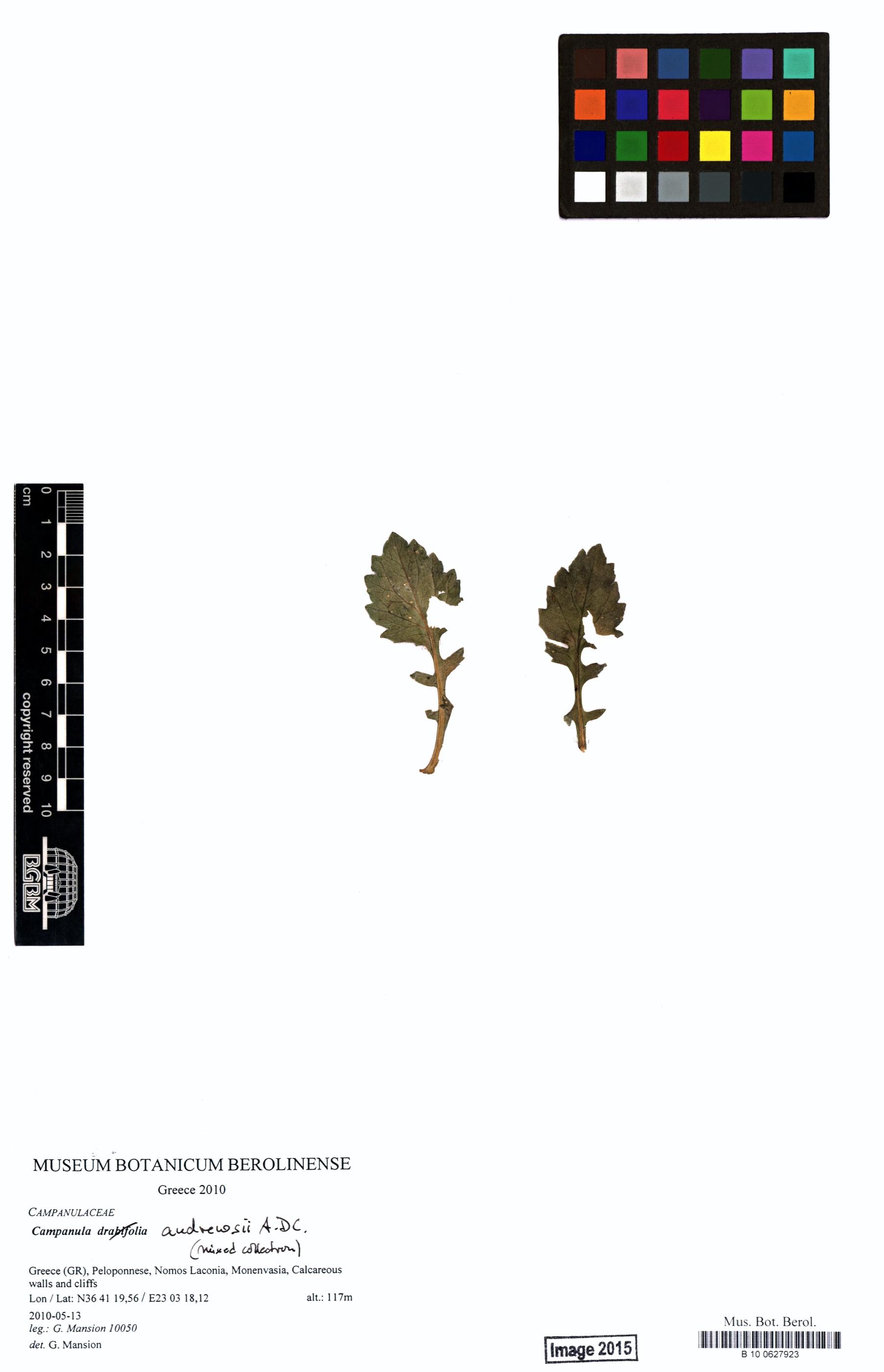 http://ww2.bgbm.org/herbarium/images/B/10/06/27/92/B_10_0627923.jpg