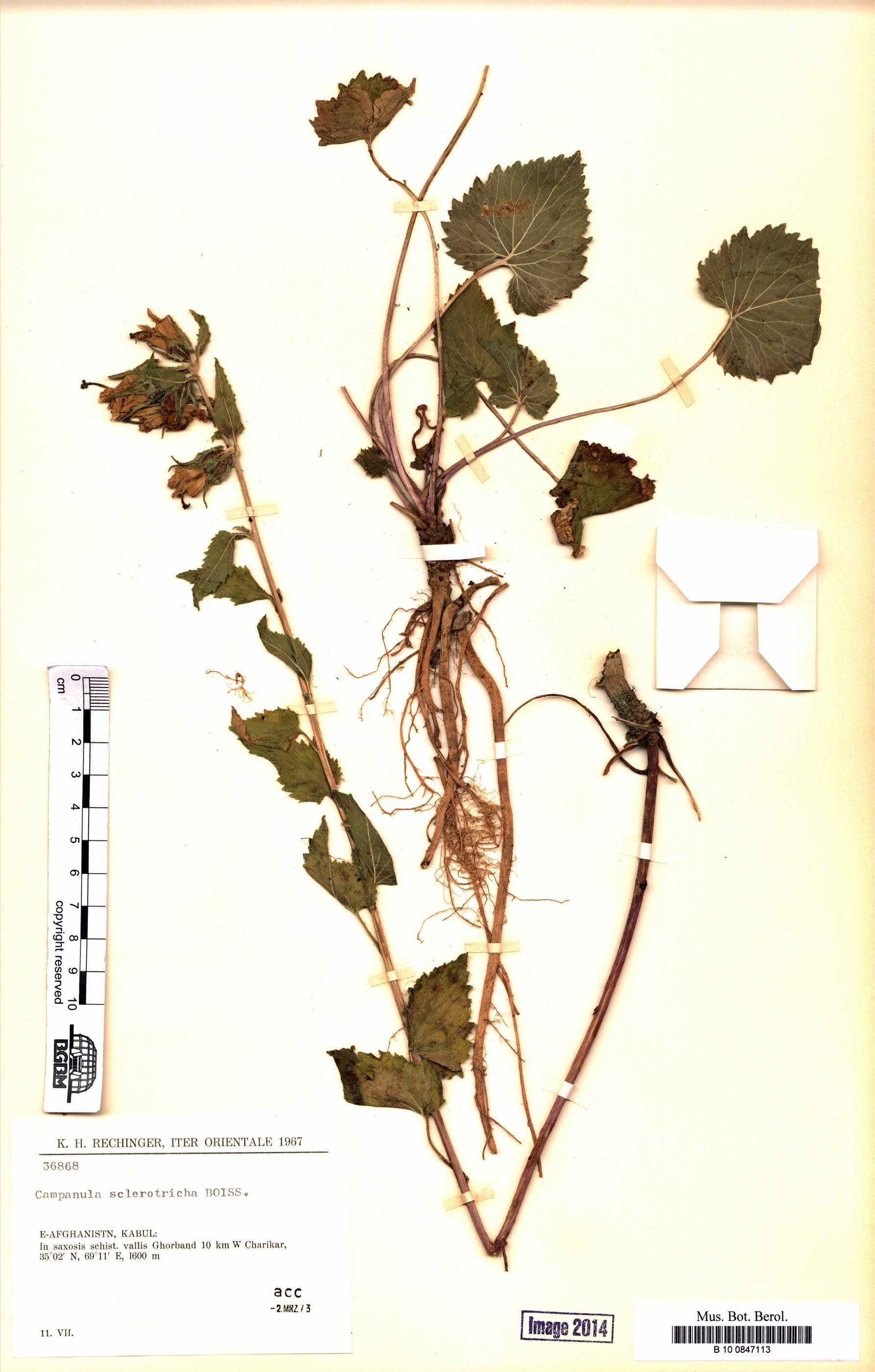 http://ww2.bgbm.org/herbarium/images/B/10/08/47/11/B_10_0847113.jpg