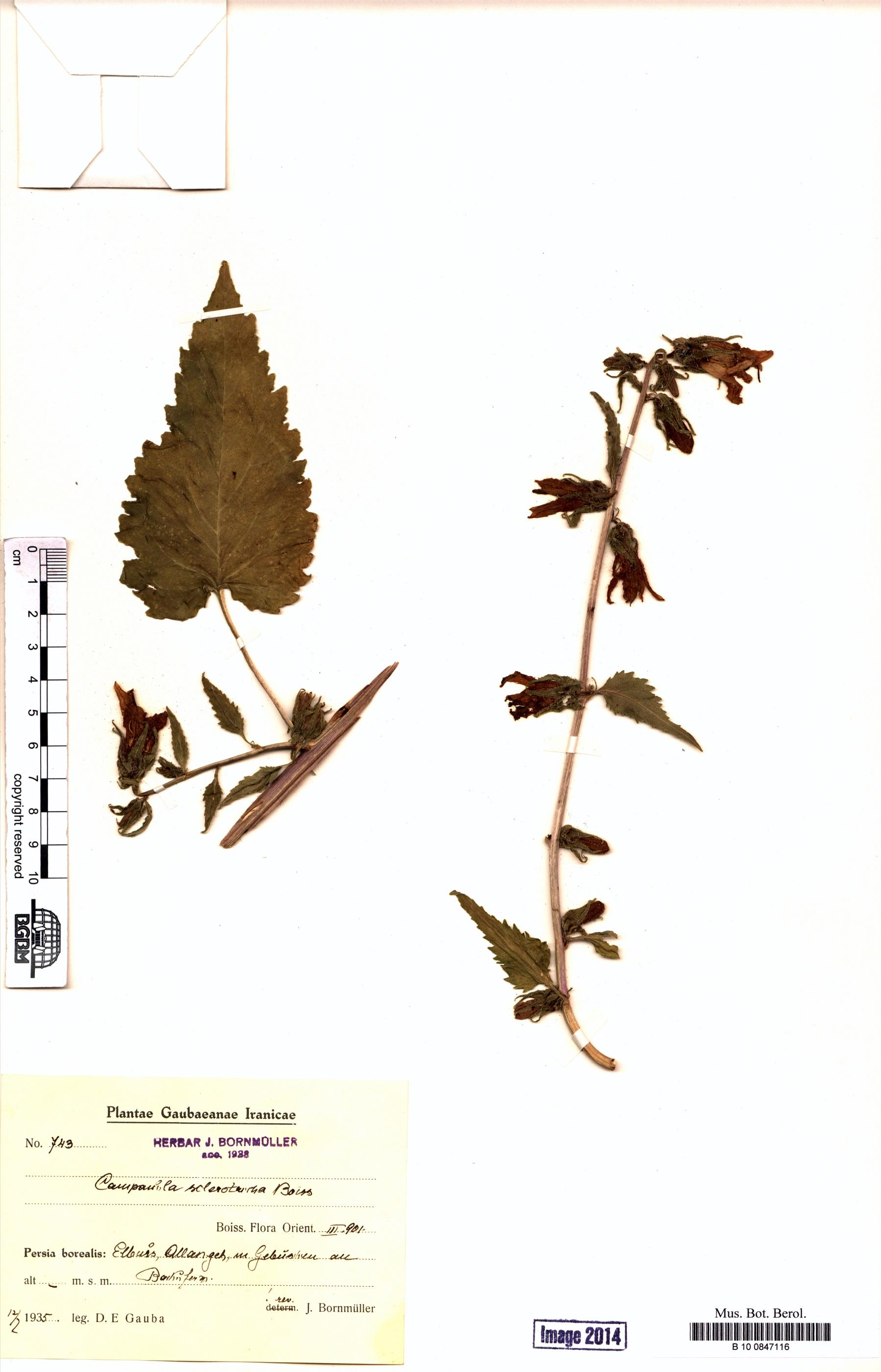 http://ww2.bgbm.org/herbarium/images/B/10/08/47/11/B_10_0847116.jpg