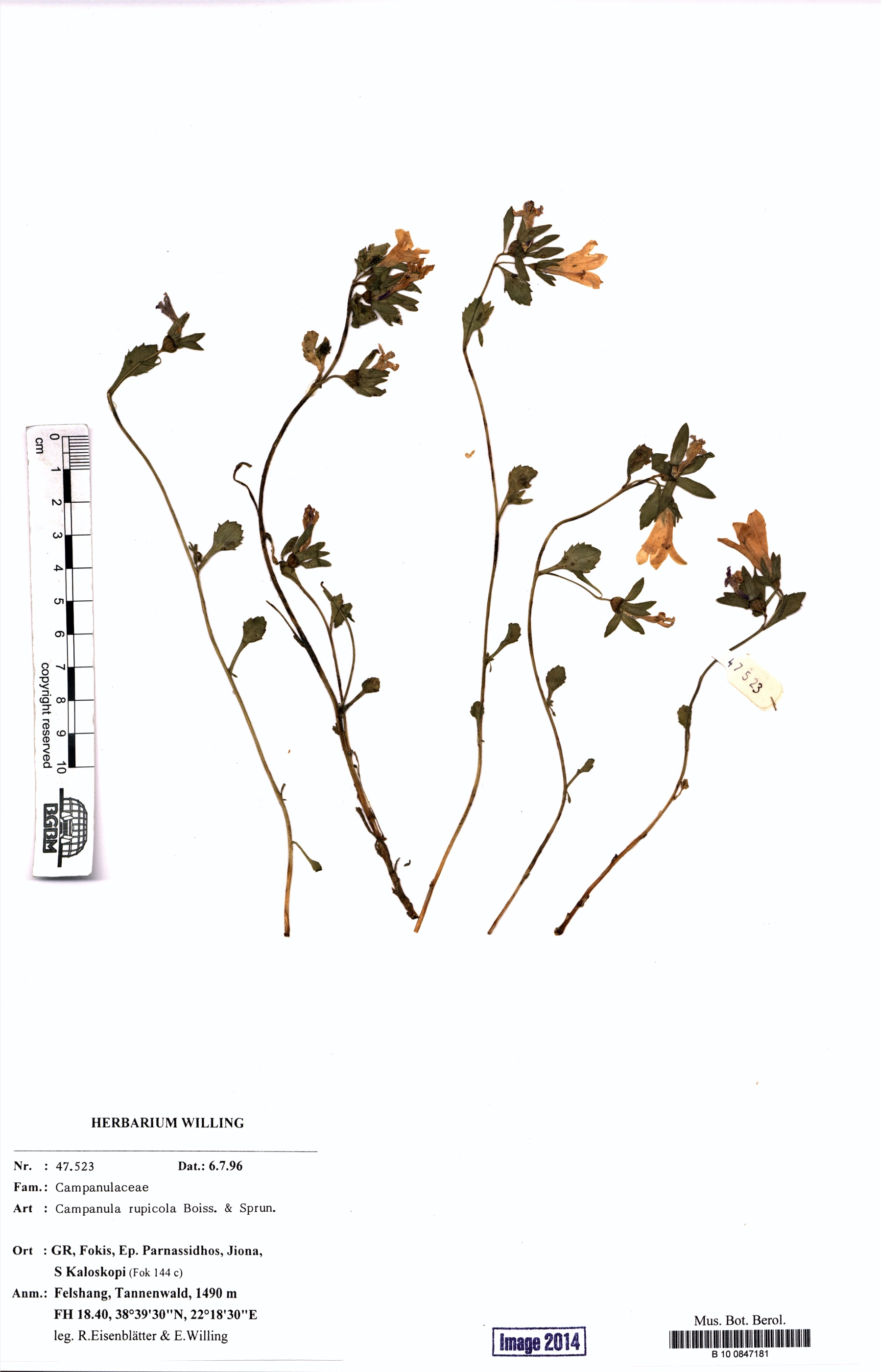 http://ww2.bgbm.org/herbarium/images/B/10/08/47/18/B_10_0847181.jpg