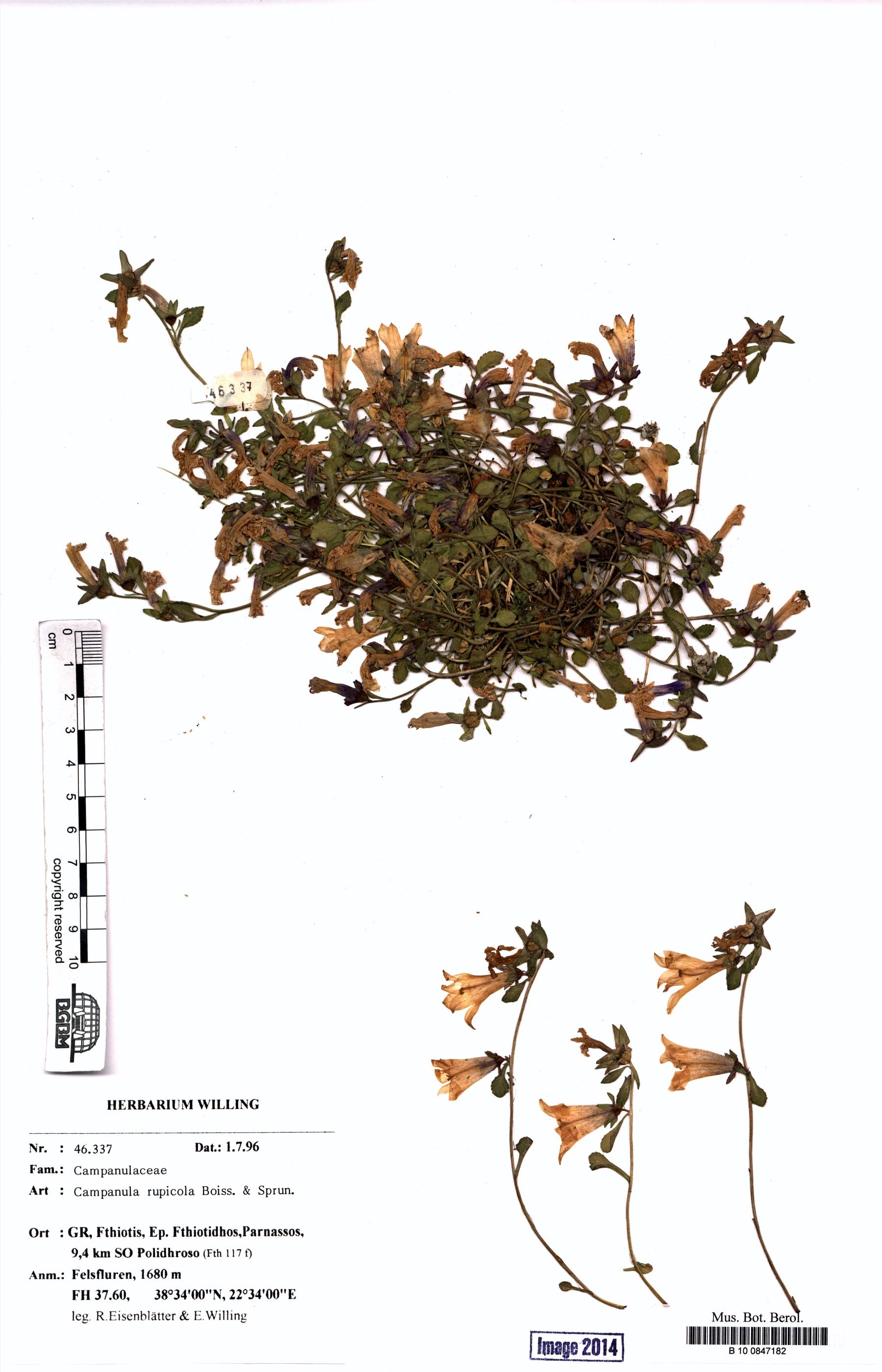 http://ww2.bgbm.org/herbarium/images/B/10/08/47/18/B_10_0847182.jpg