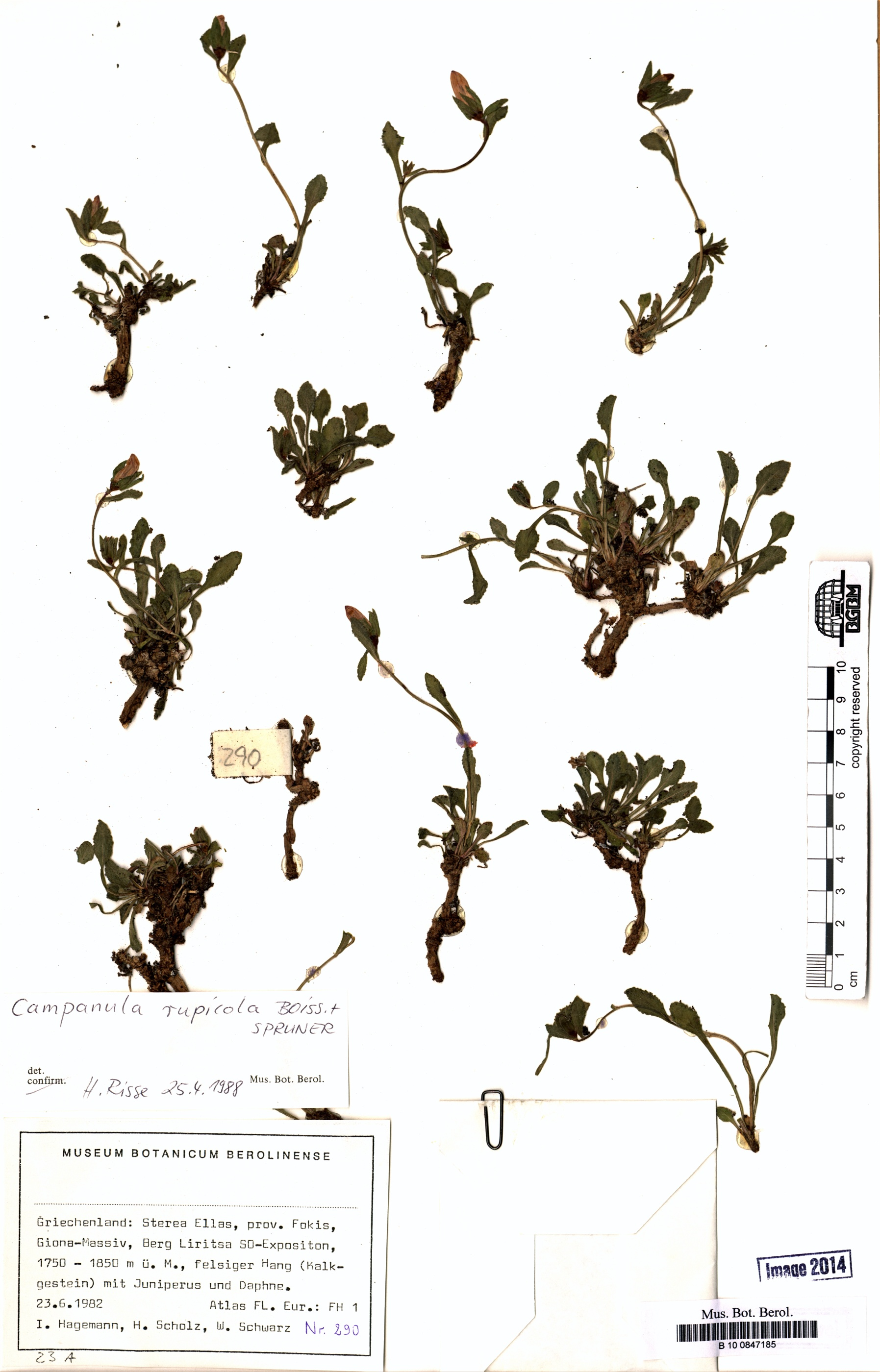 http://ww2.bgbm.org/herbarium/images/B/10/08/47/18/B_10_0847185.jpg