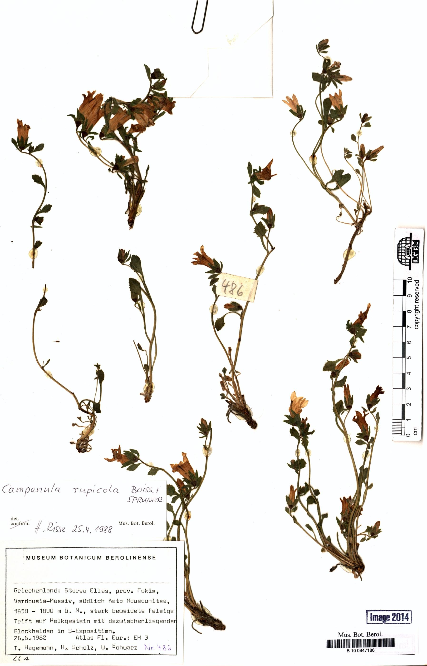 http://ww2.bgbm.org/herbarium/images/B/10/08/47/18/B_10_0847186.jpg