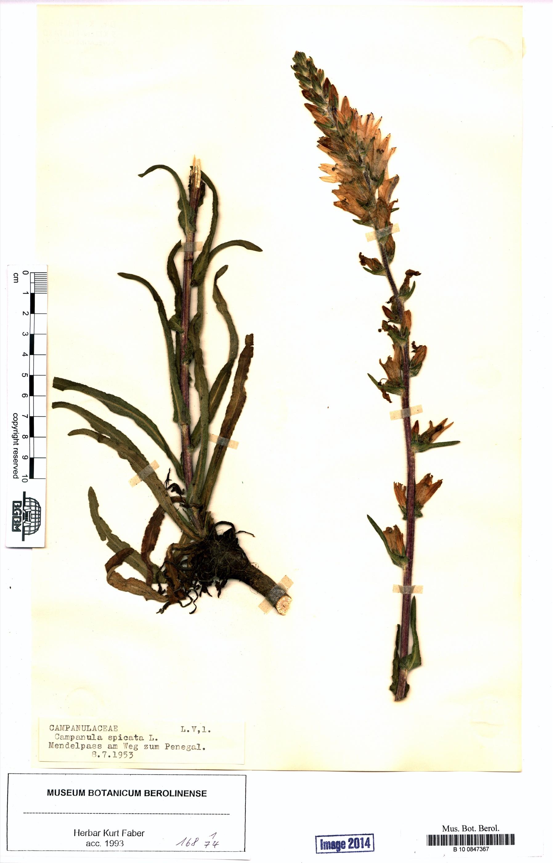 http://ww2.bgbm.org/herbarium/images/B/10/08/47/36/B_10_0847367.jpg